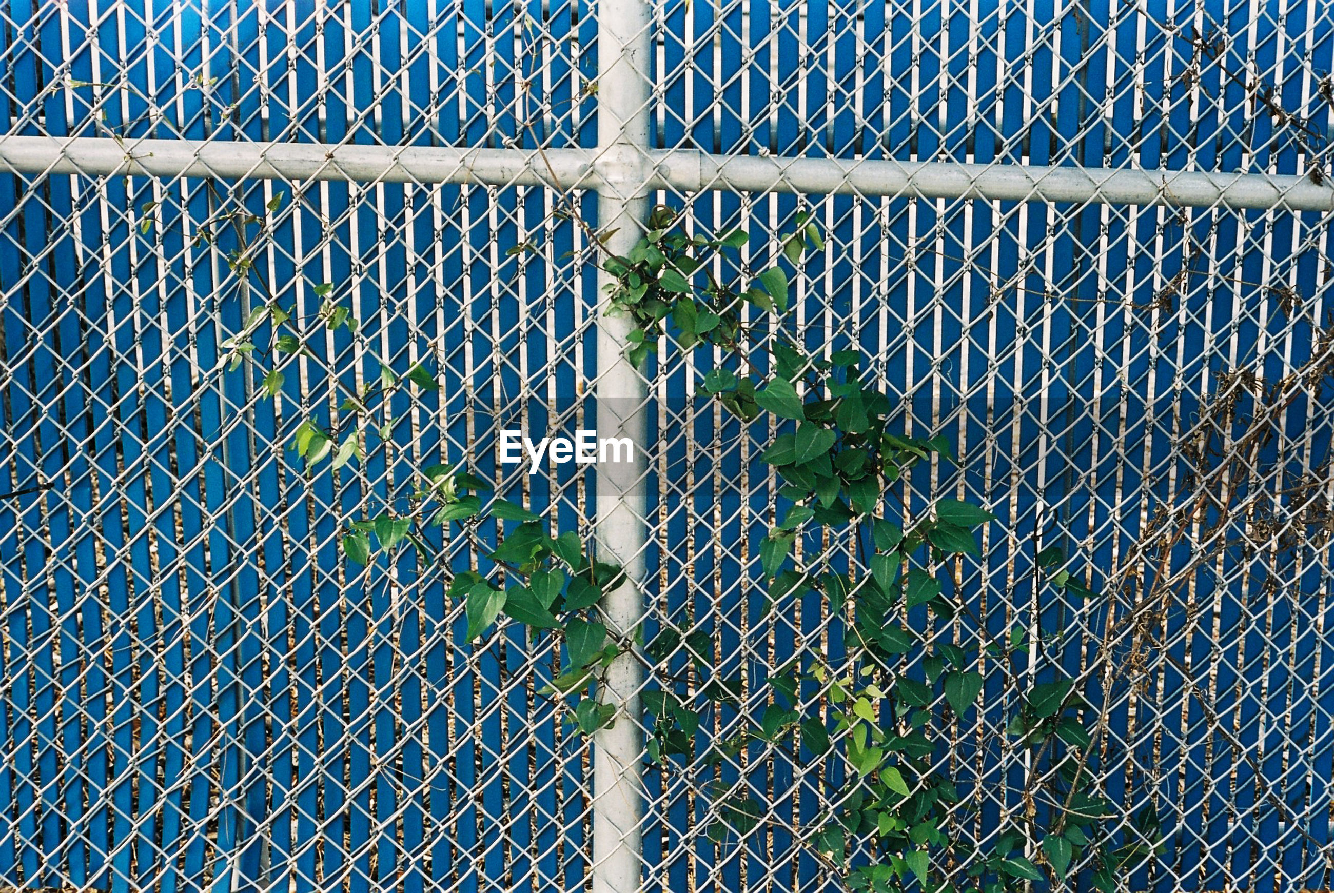 High angle view of plant growing on chainlink fence