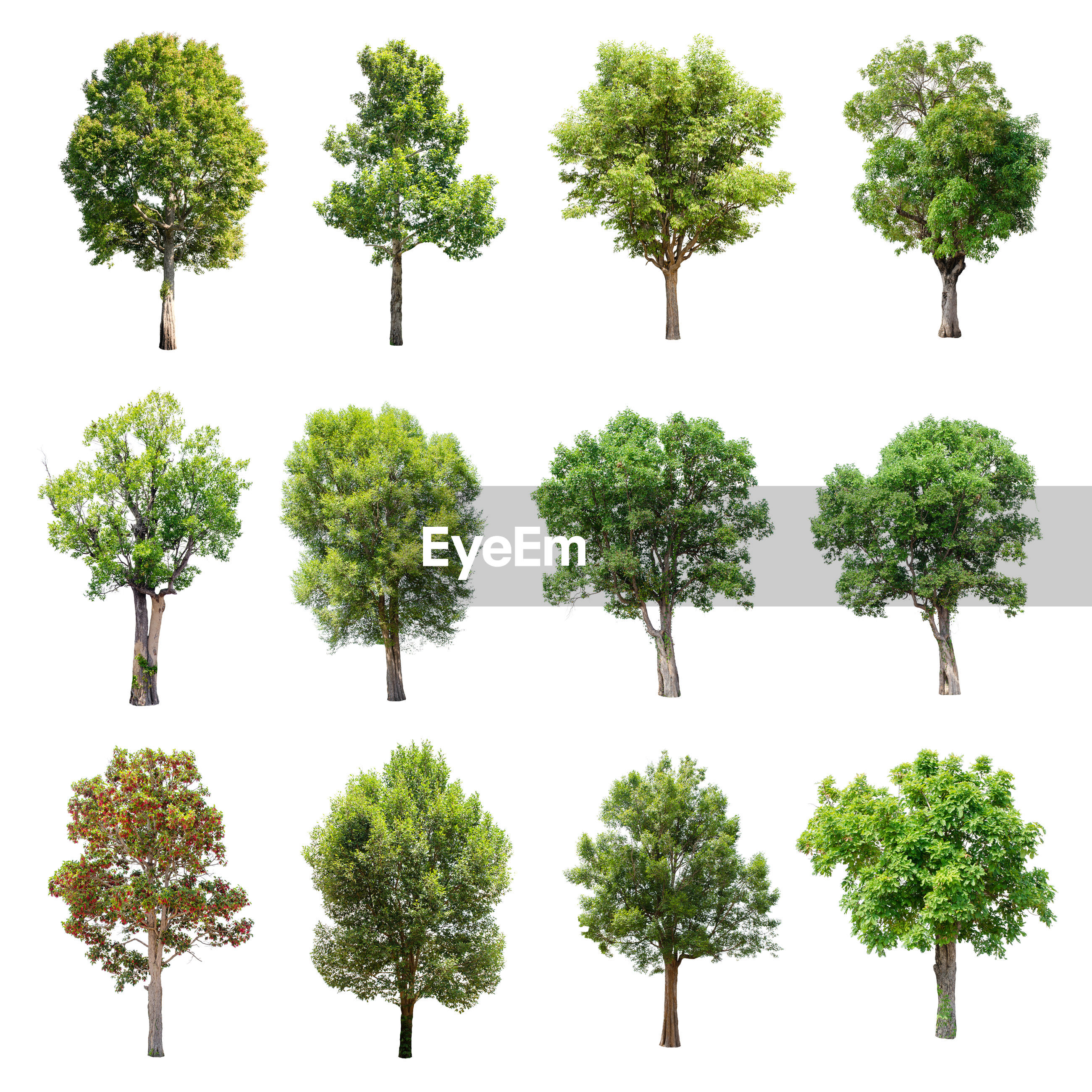 Trees against white background