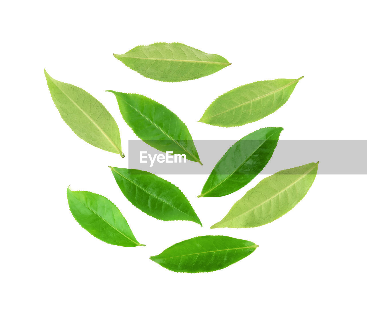 leaf, plant part, green color, white background, no people, nature, close-up, studio shot, plant, indoors, pattern, directly above, cut out, food and drink, leaf vein, herb, leaves, freshness, tea leaves, digital composite