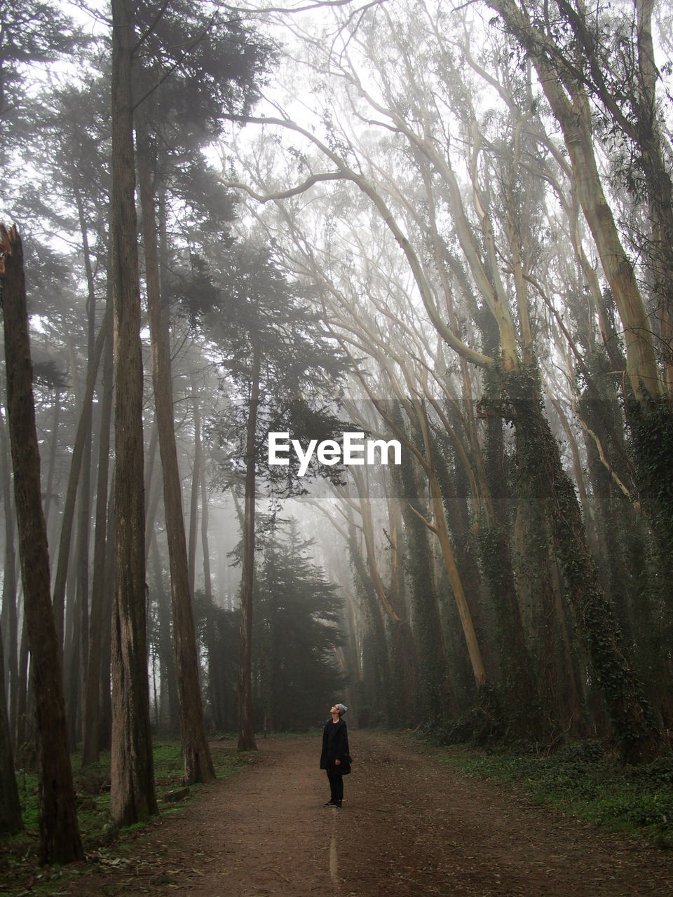 Man Standing On Dirt Road Amidst Trees In Forest During Foggy Weather At Presidio Park