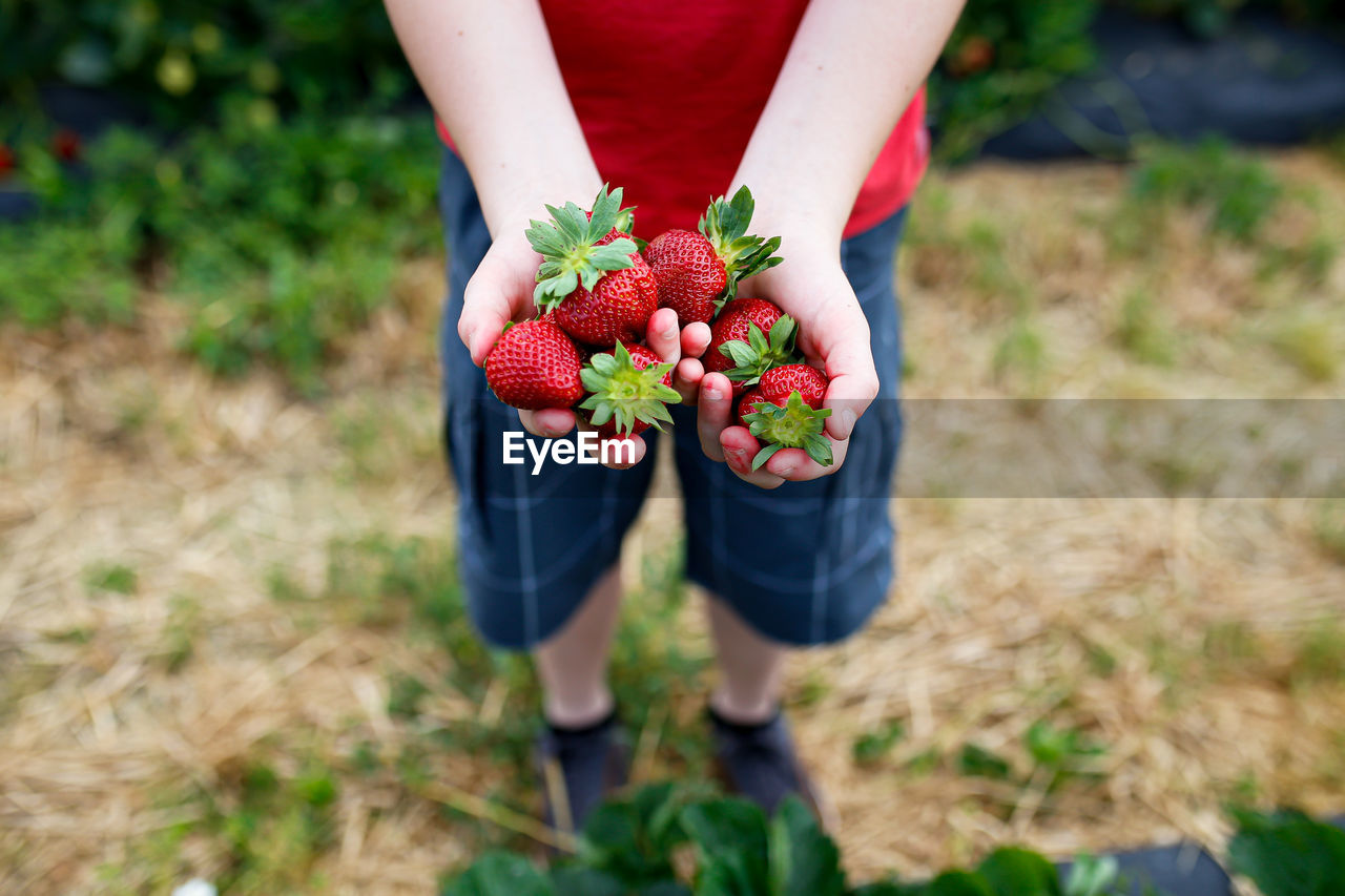 Low section of boy holding strawberries