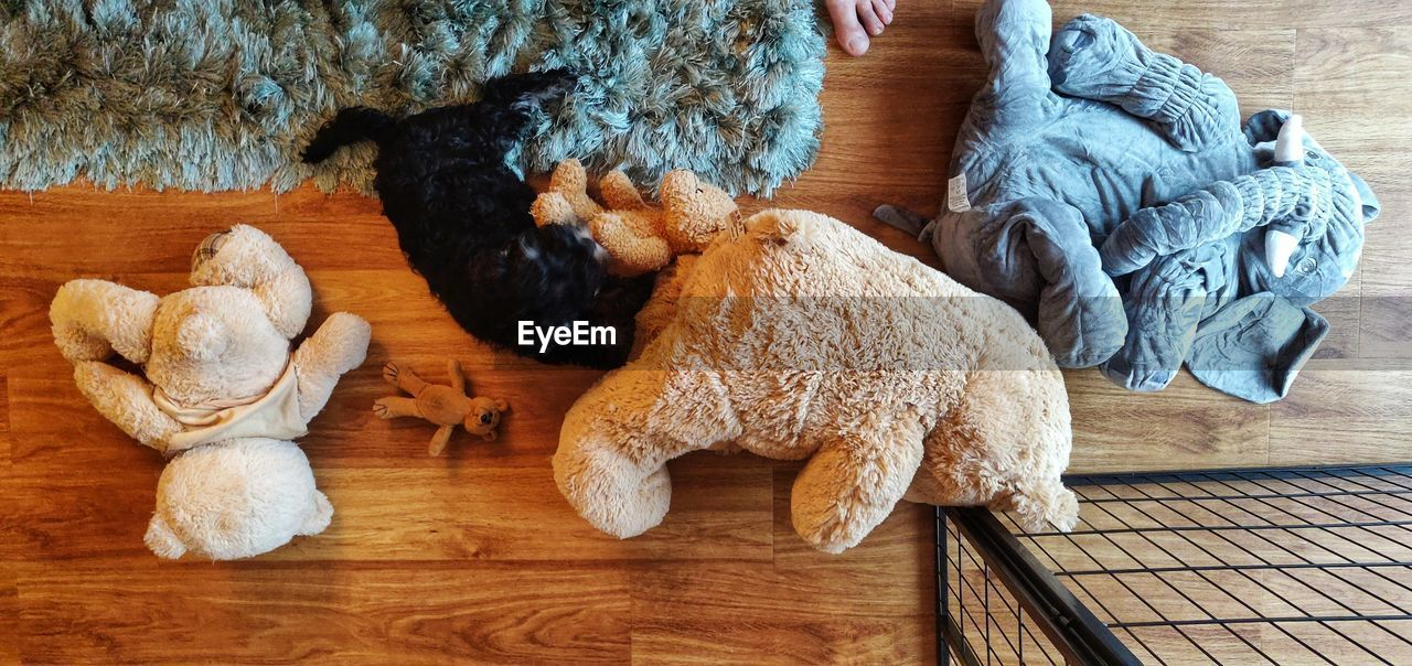 indoors, animal, mammal, no people, animal themes, domestic animals, high angle view, domestic, pets, stuffed toy, relaxation, toy, one animal, wood - material, canine, vertebrate, dog, teddy bear, textile, animal representation, flooring