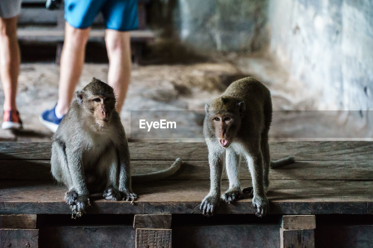 Monkeys Sitting On Wooden Seat