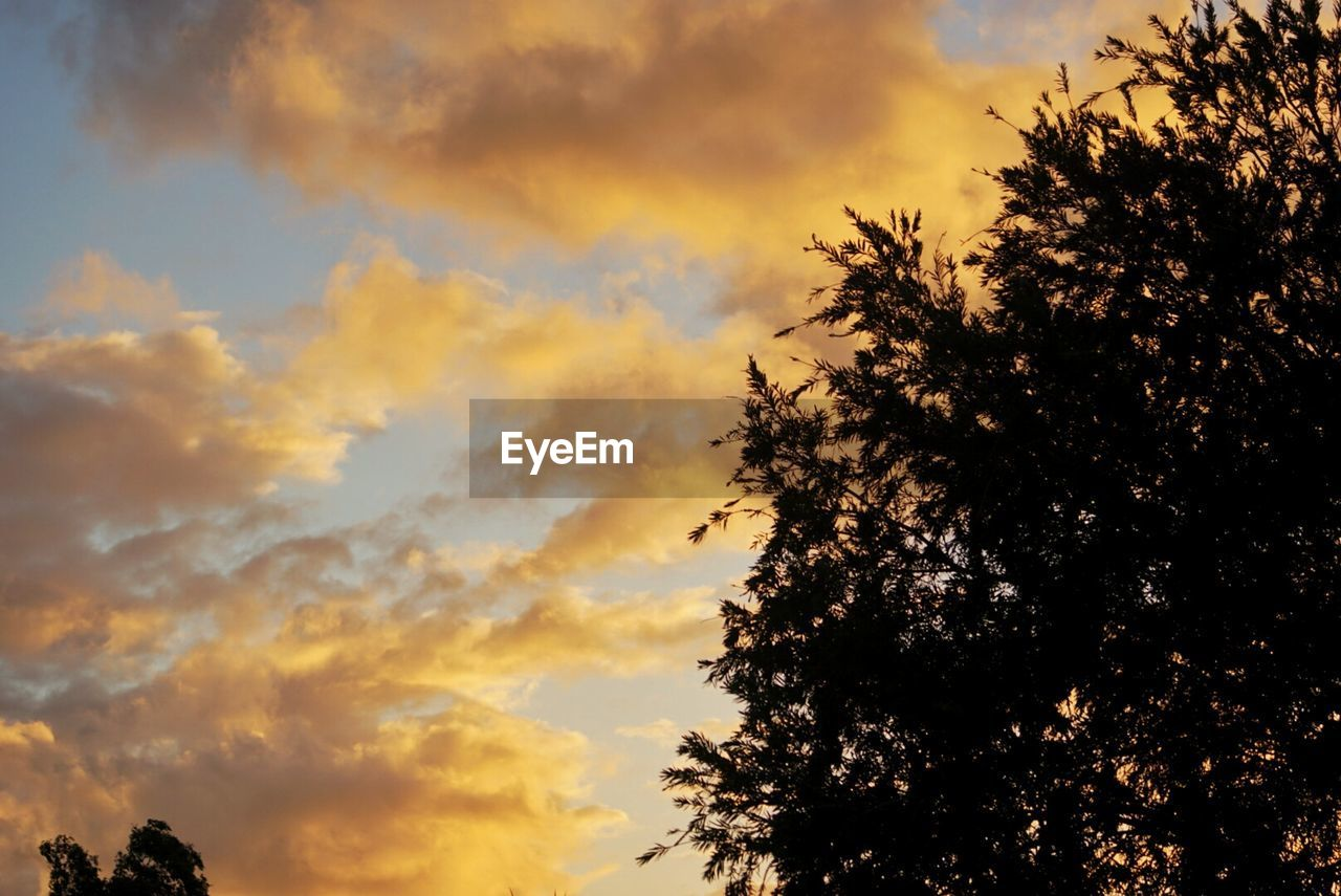 tree, sunset, sky, beauty in nature, cloud - sky, nature, silhouette, scenics, tranquil scene, low angle view, dramatic sky, tranquility, no people, outdoors, growth, day