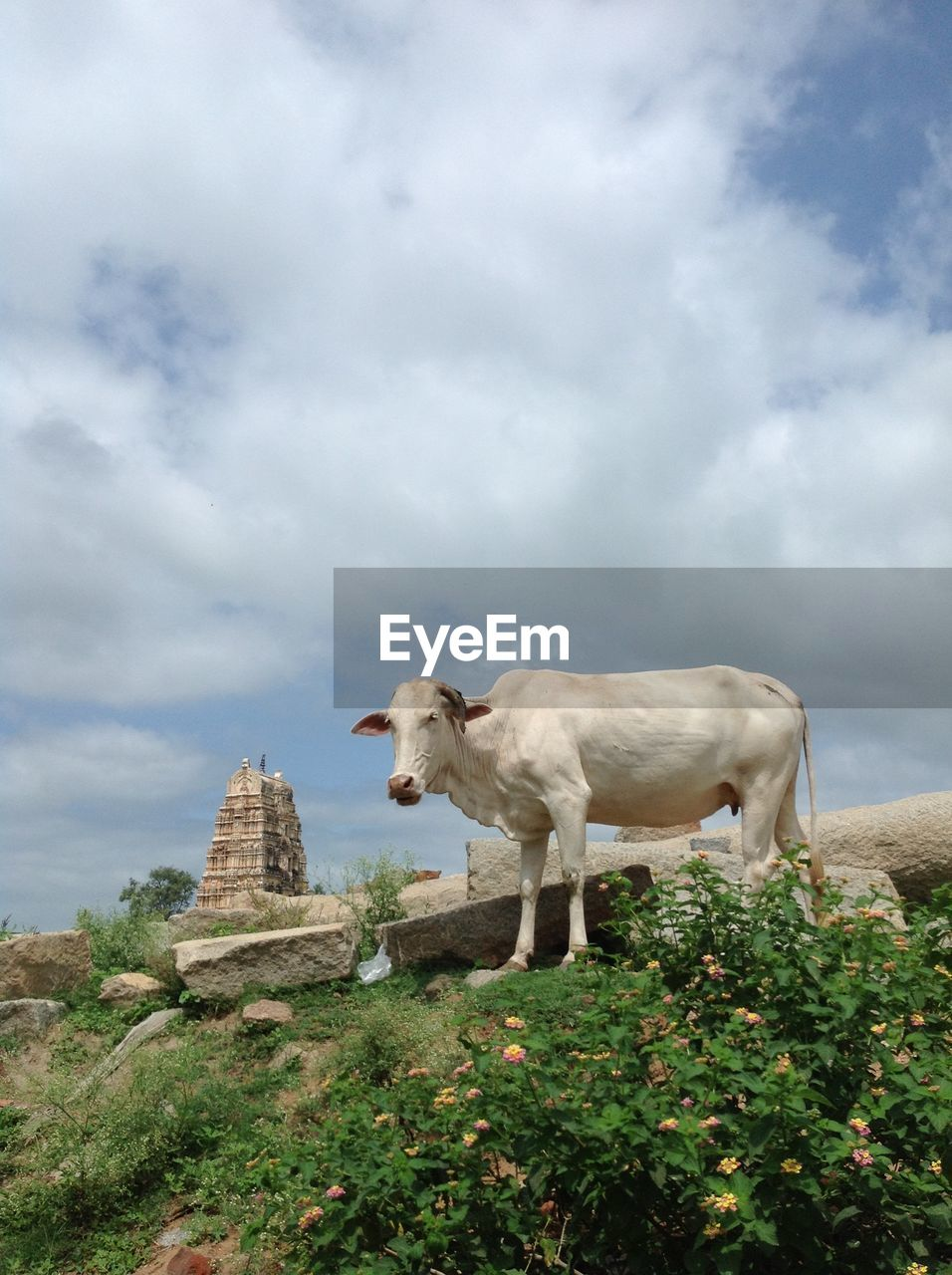 Low Angle View Of A Cow Against Cloudy Sky
