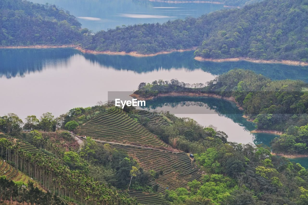 High Angle View Of Rice Paddy By Lake