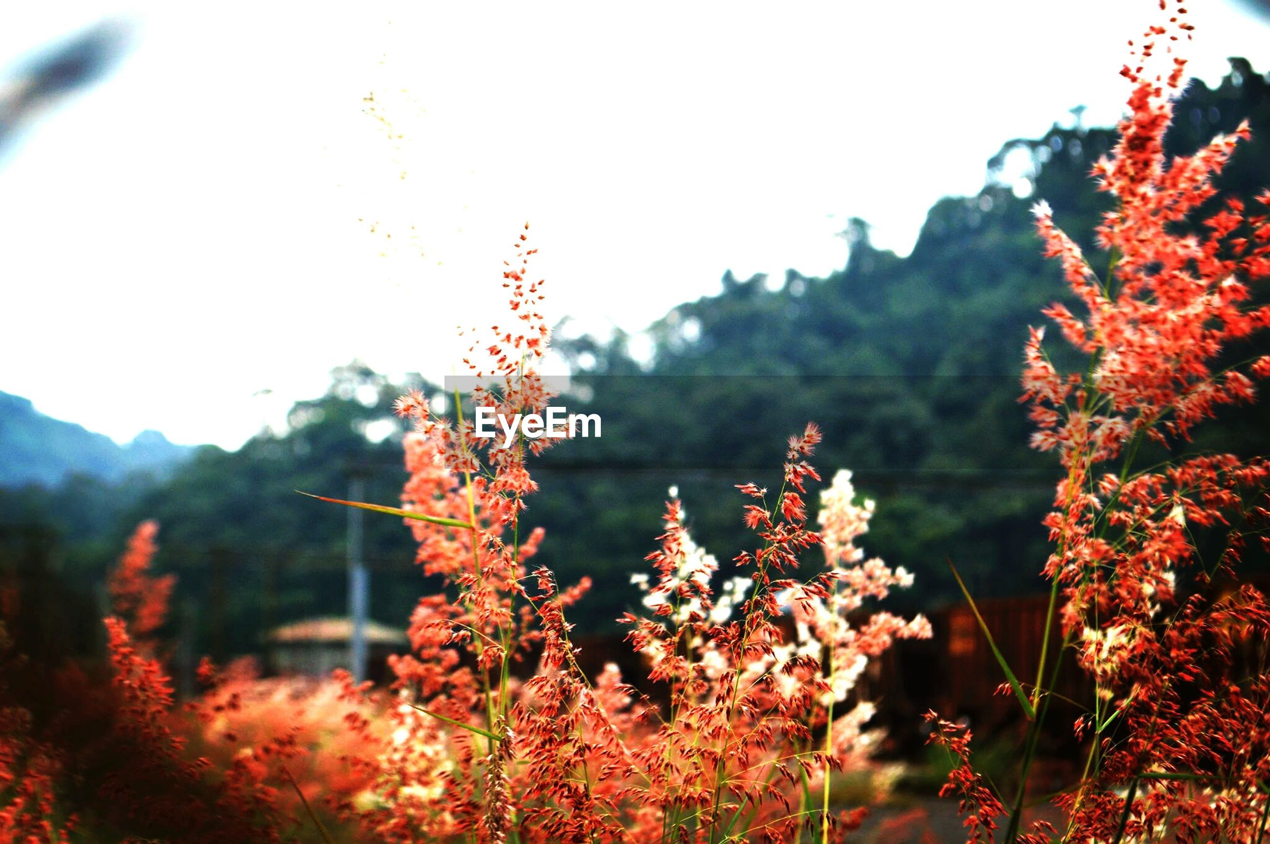flower, growth, tree, freshness, beauty in nature, nature, clear sky, fragility, branch, focus on foreground, blooming, plant, red, blossom, in bloom, close-up, low angle view, season, tranquility, sky