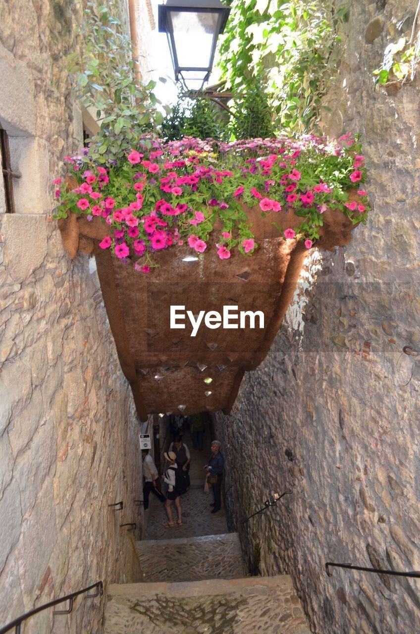 flower, growth, nature, plant, outdoors, day, architecture, beauty in nature, real people, freshness