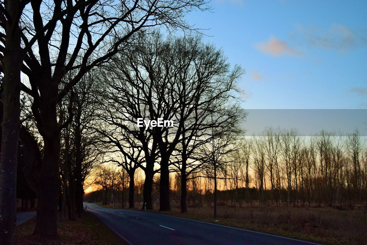 tree, sky, plant, bare tree, road, transportation, no people, the way forward, tranquility, direction, nature, tranquil scene, beauty in nature, scenics - nature, sunset, silhouette, non-urban scene, diminishing perspective, land, outdoors, treelined