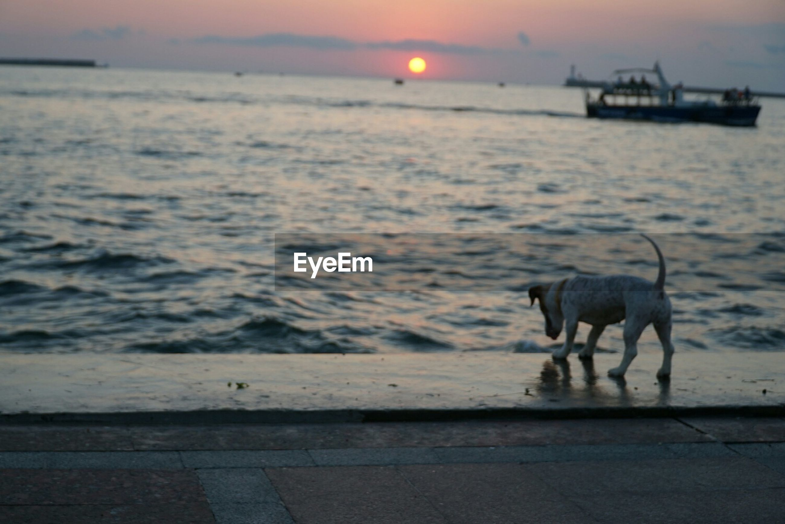 DOG AT BEACH AGAINST SKY DURING SUNSET