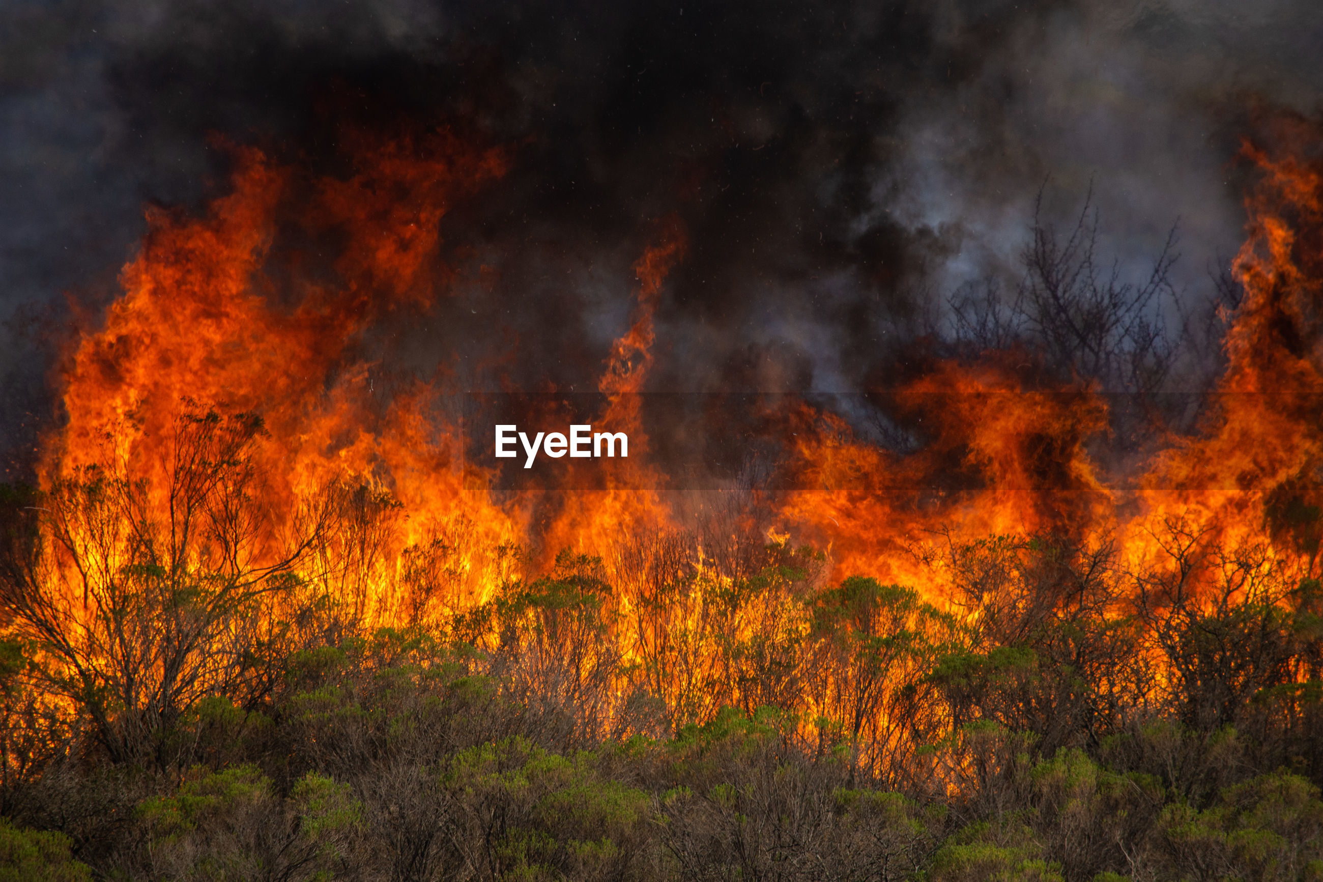 LOW ANGLE VIEW OF FIRE ON FOREST