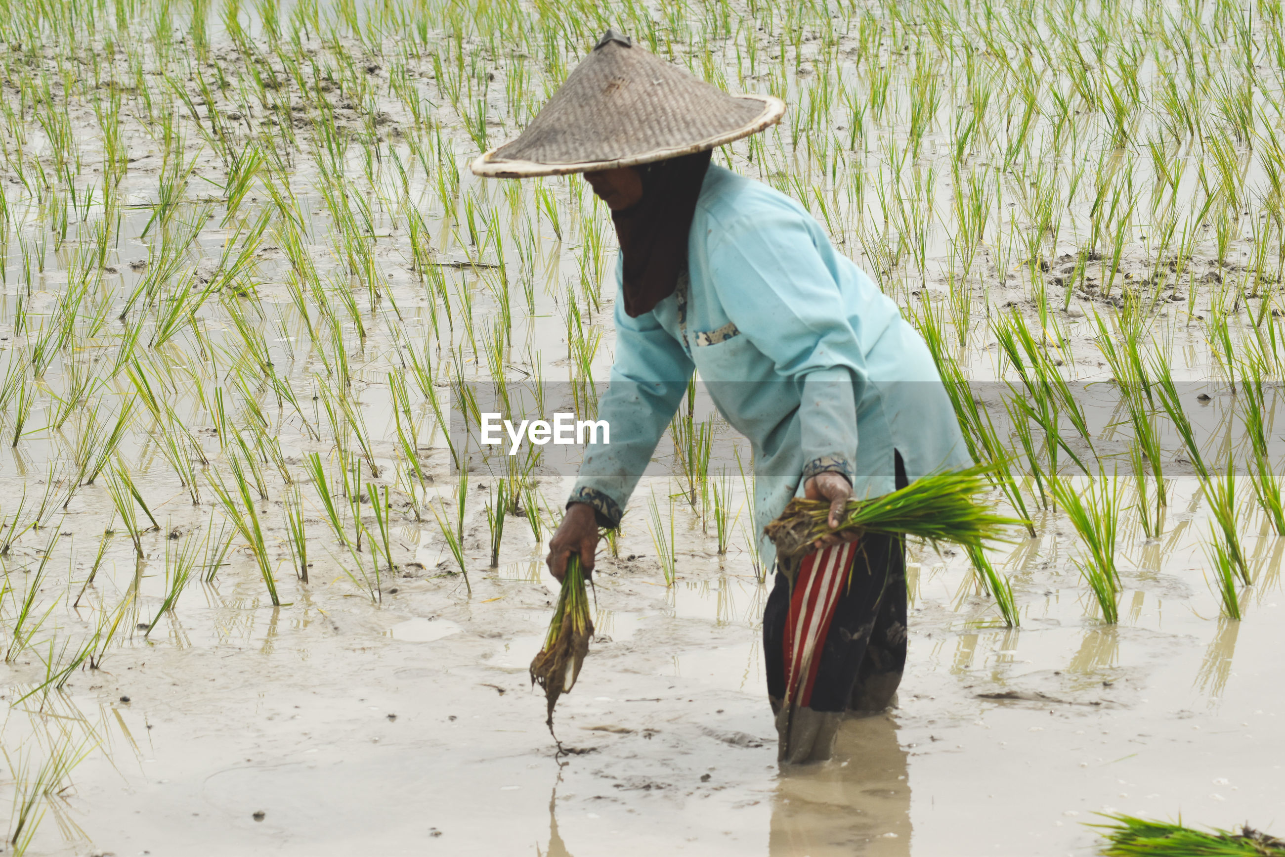 Female farmer working on agricultural field
