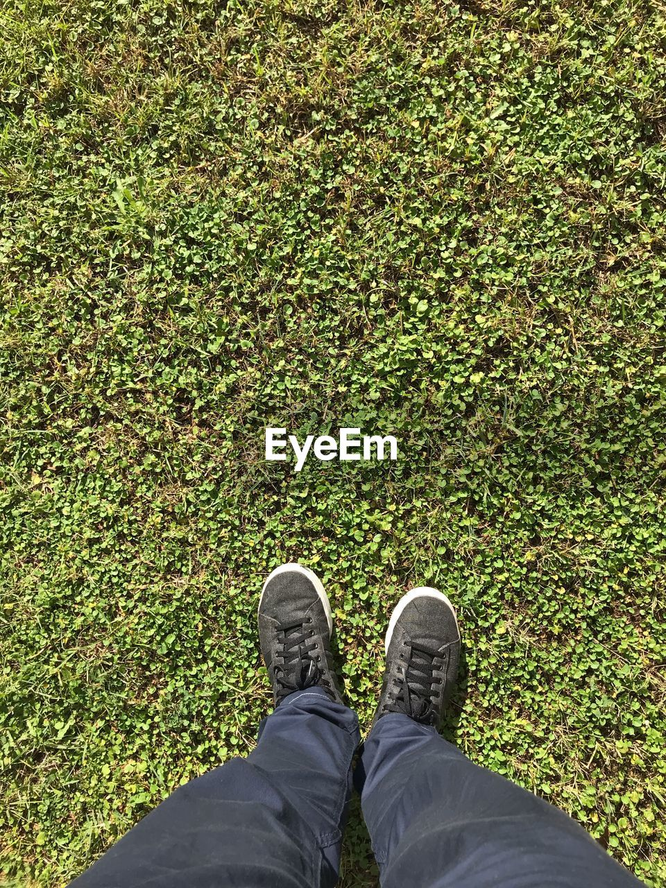 human leg, one person, low section, human body part, body part, personal perspective, men, shoe, standing, plant, real people, green color, grass, land, day, high angle view, lifestyles, nature, field, outdoors, human foot, human limb, jeans