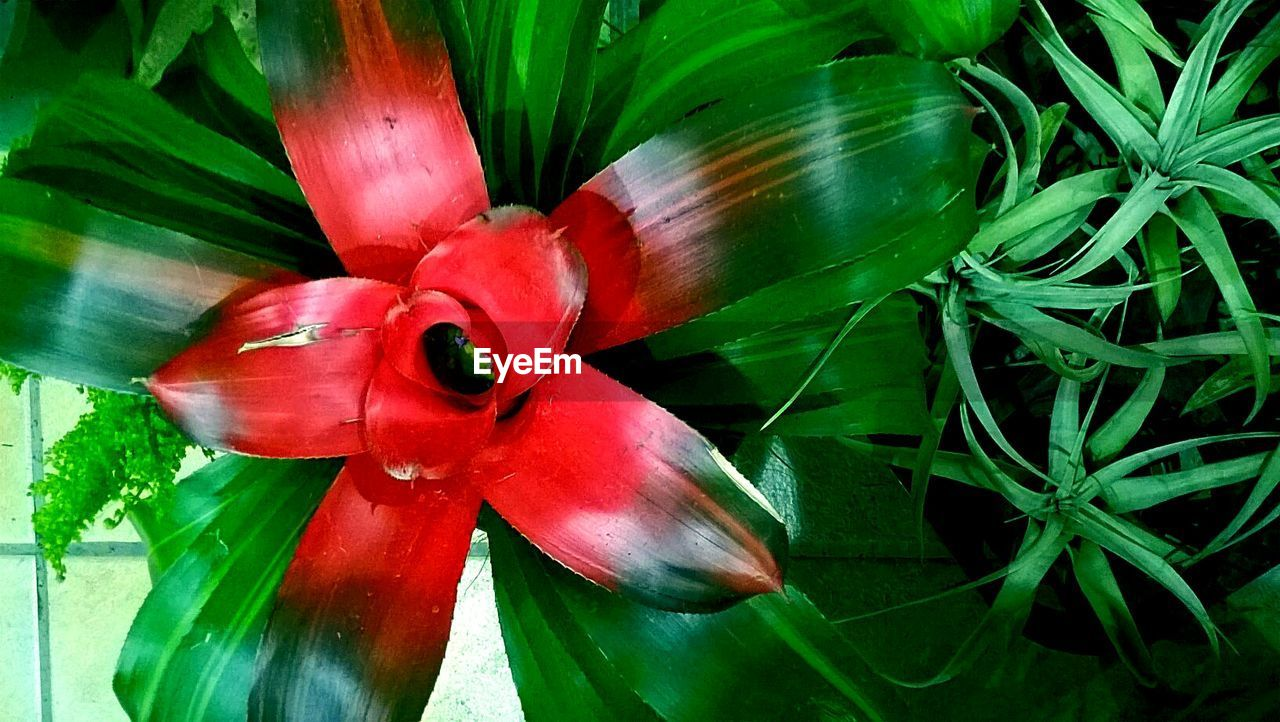 green color, flower, nature, plant, growth, red, beauty in nature, fragility, freshness, leaf, day, no people, flower head, close-up, outdoors, water