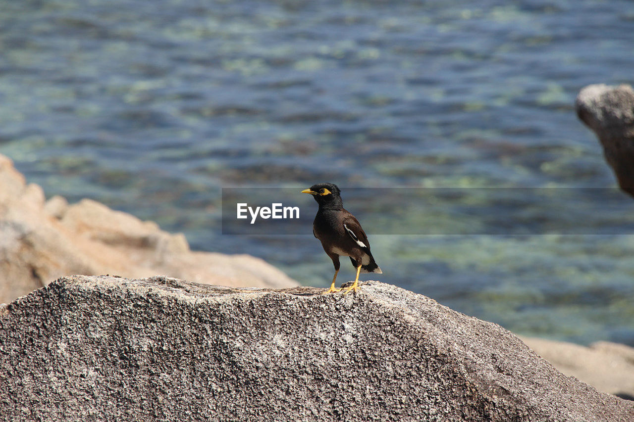 animal wildlife, animal themes, animals in the wild, animal, bird, vertebrate, solid, one animal, rock, rock - object, water, perching, day, no people, nature, focus on foreground, sea, outdoors, sunlight