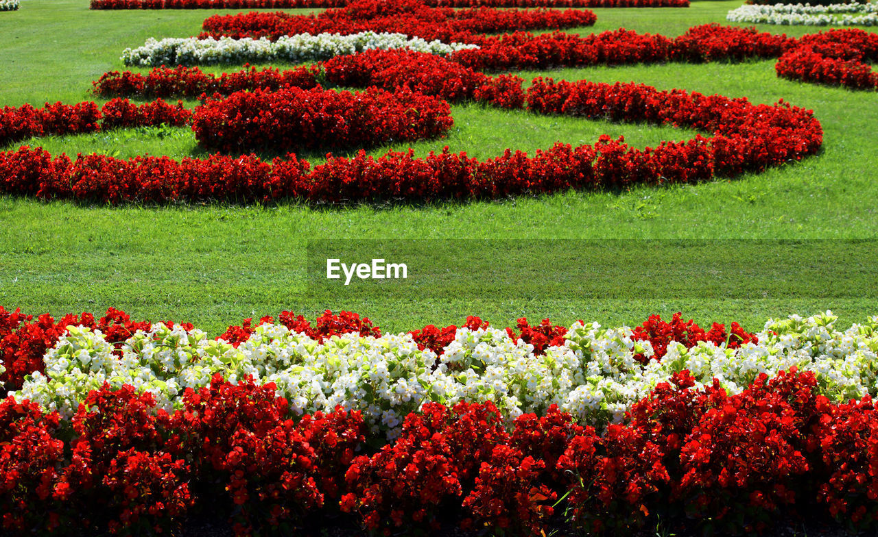 flower, growth, plant, beauty in nature, nature, freshness, flowerbed, no people, outdoors, fragility, day, red, landscape, agriculture, flower head, horticulture, grass