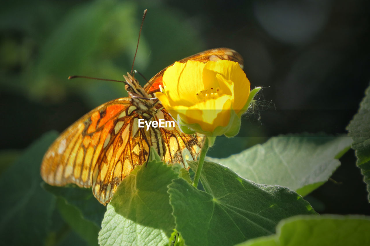 insect, flower, animals in the wild, animal themes, one animal, leaf, nature, fragility, freshness, animal wildlife, beauty in nature, petal, growth, plant, yellow, butterfly - insect, no people, outdoors, flower head, day, close-up, pollination
