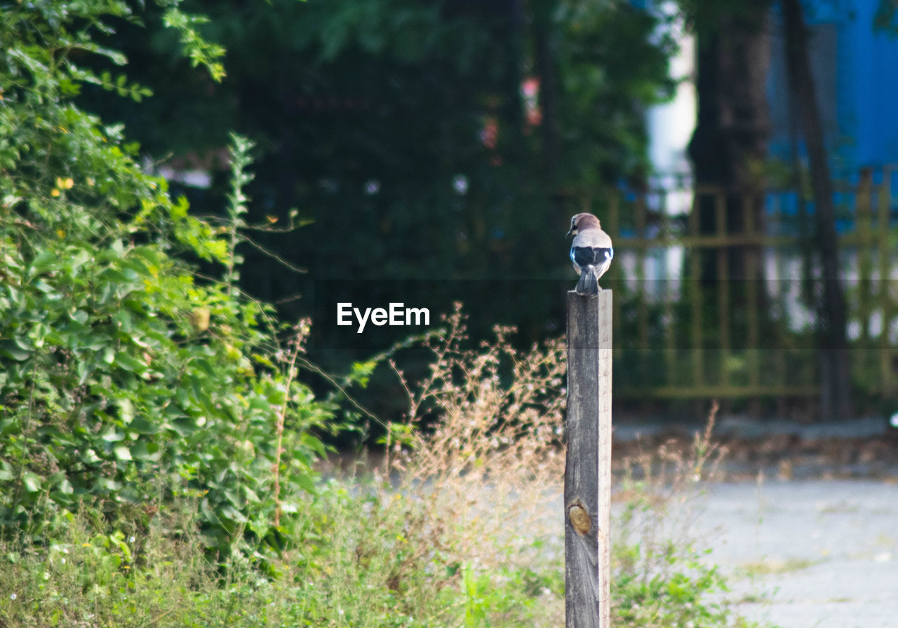 focus on foreground, plant, day, no people, land, nature, outdoors, metal, tree, growth, field, close-up, safety, pole, animals in the wild, animal themes, forest, security, animal, pipe - tube, wooden post