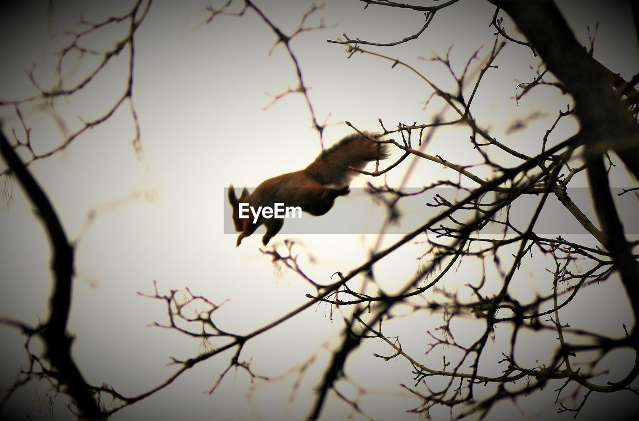 Low Angle View Of Squirrel Jumping Over Bare Tree