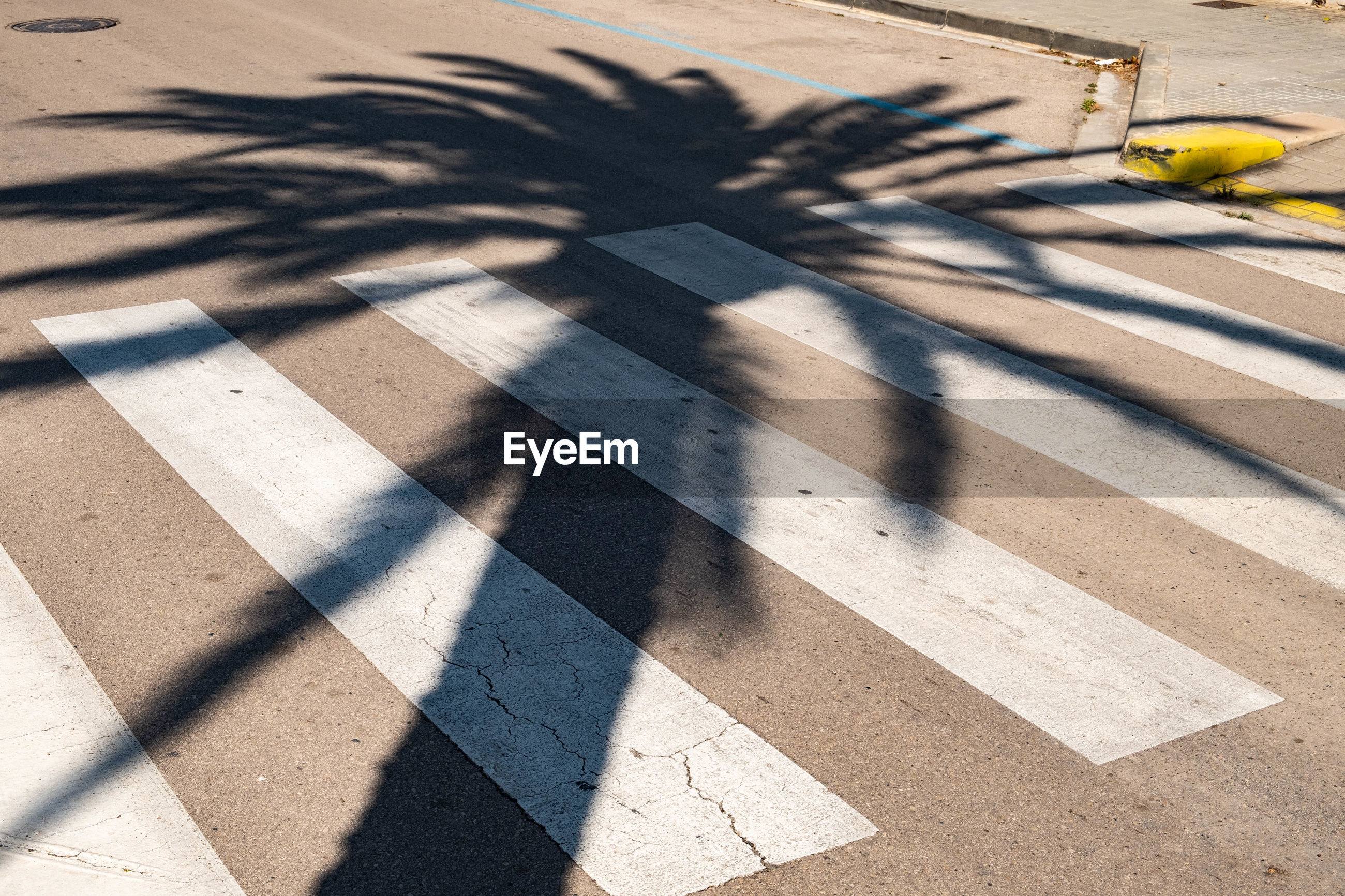 Shadow of palm tree on street