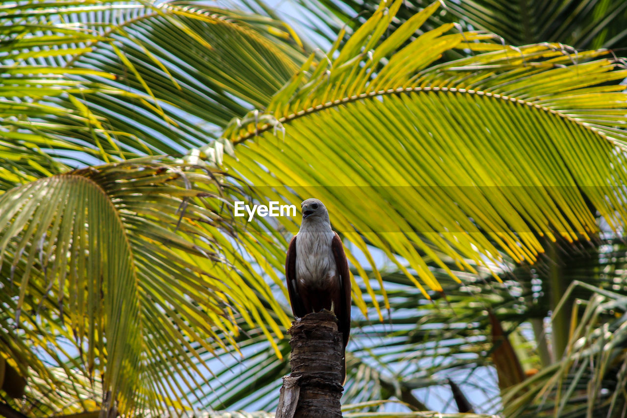 animal wildlife, bird, animals in the wild, vertebrate, animal themes, animal, perching, tree, plant, one animal, palm tree, nature, green color, no people, focus on foreground, low angle view, leaf, day, beauty in nature, growth, palm leaf, outdoors
