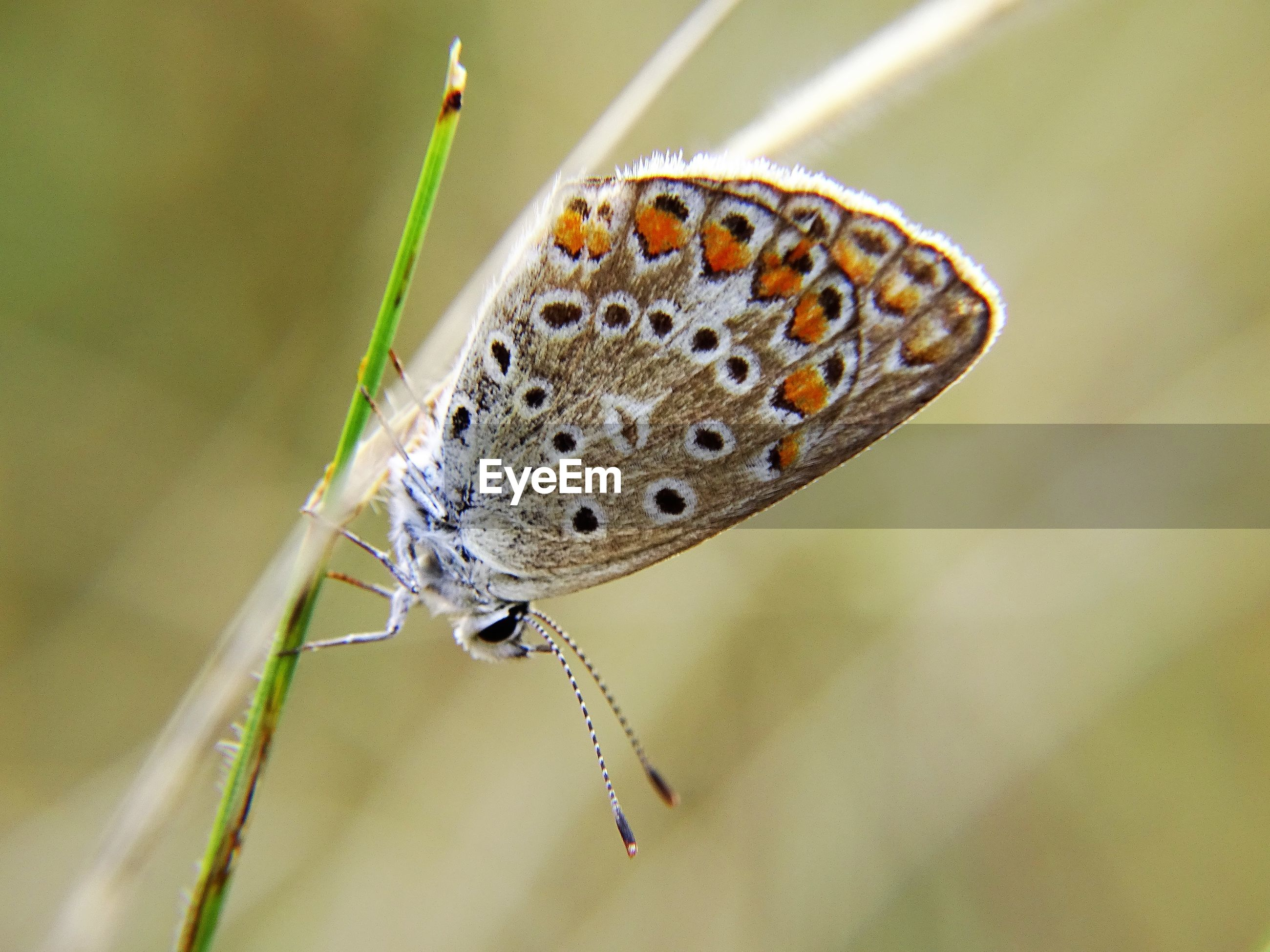 Close-up of butterfly perching on leaf