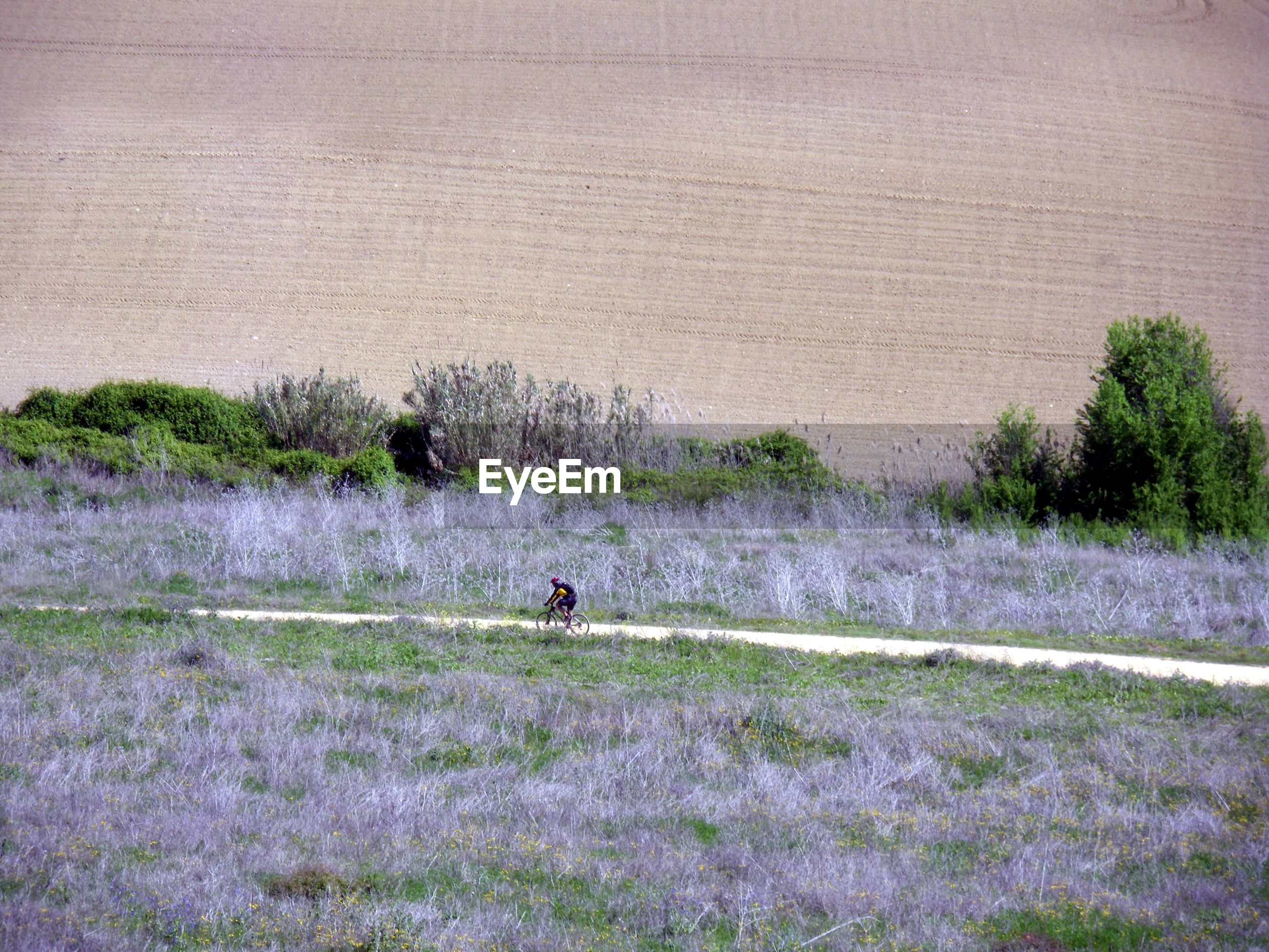 Distant view of person riding bicycle amidst farm field
