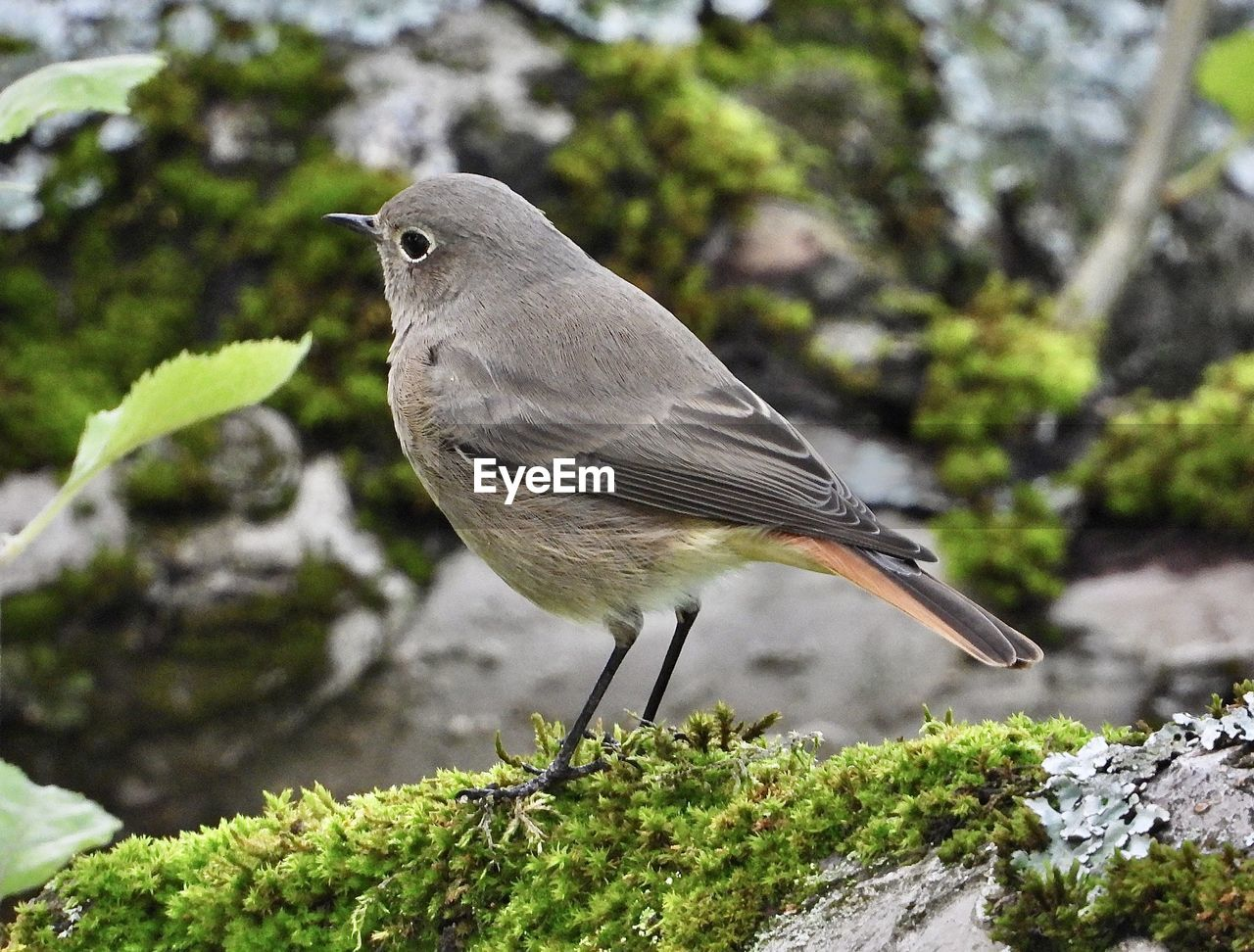one animal, animal themes, vertebrate, animal wildlife, animal, bird, animals in the wild, perching, rock, rock - object, plant, focus on foreground, day, solid, close-up, no people, tree, nature, side view, full length, outdoors
