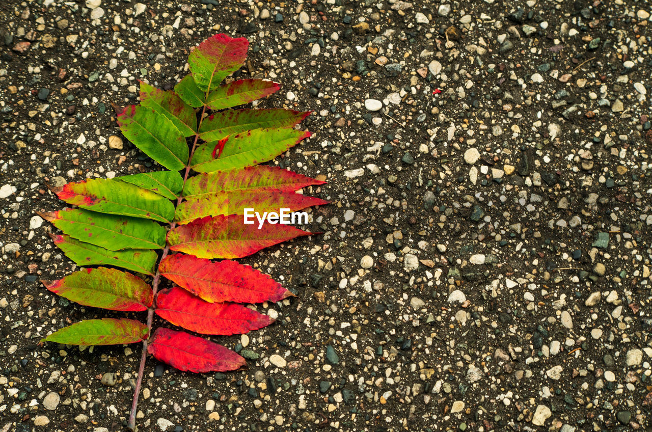 leaf, plant part, nature, high angle view, day, close-up, no people, autumn, change, plant, beauty in nature, outdoors, falling, directly above, green color, road, textured, street, growth, leaves, maple leaf, natural condition, gravel
