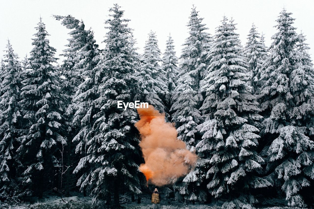 Smoke Amidst Snow Covered Trees