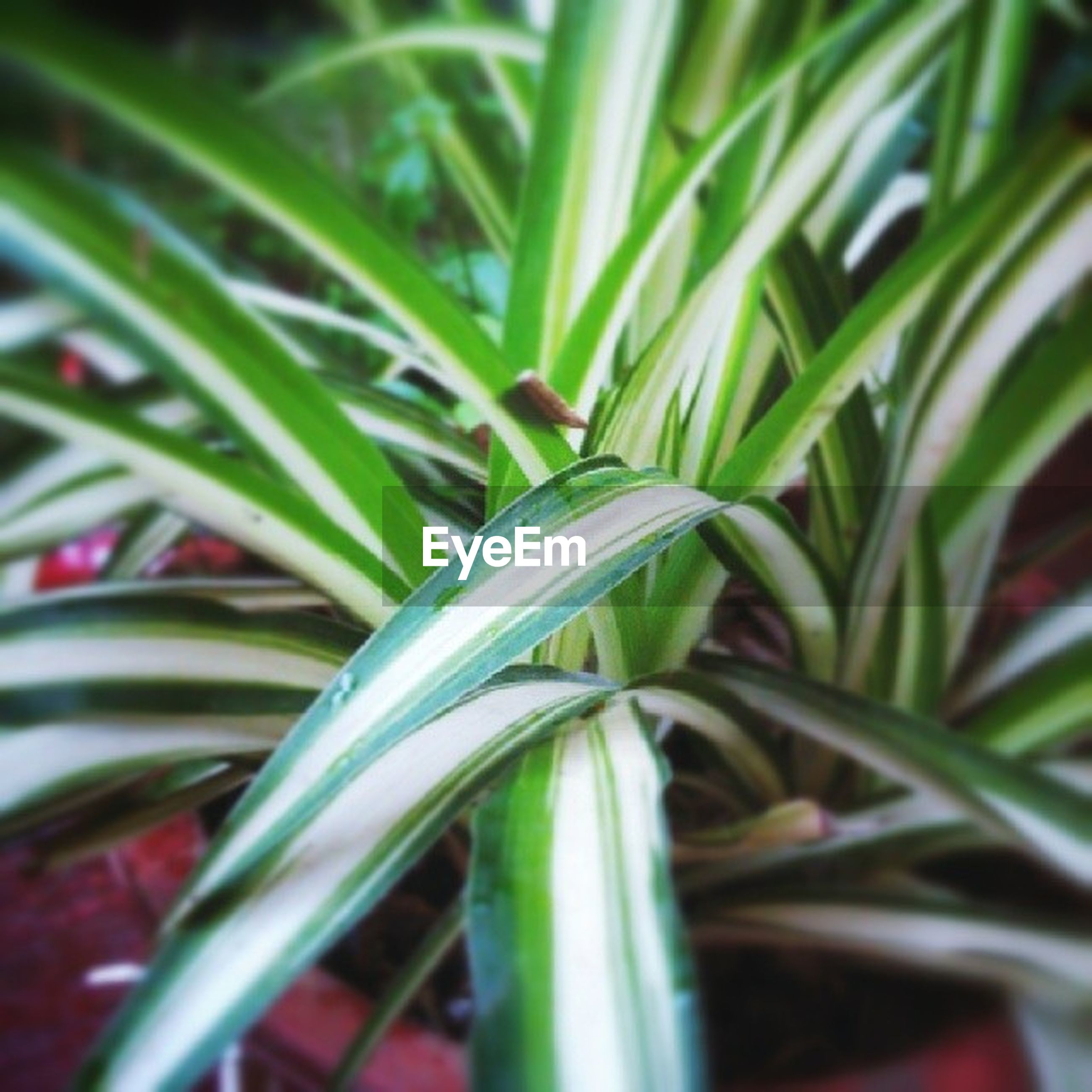 green color, growth, plant, leaf, freshness, close-up, nature, selective focus, beauty in nature, growing, green, focus on foreground, stem, no people, fragility, day, outdoors, field, blade of grass, backgrounds