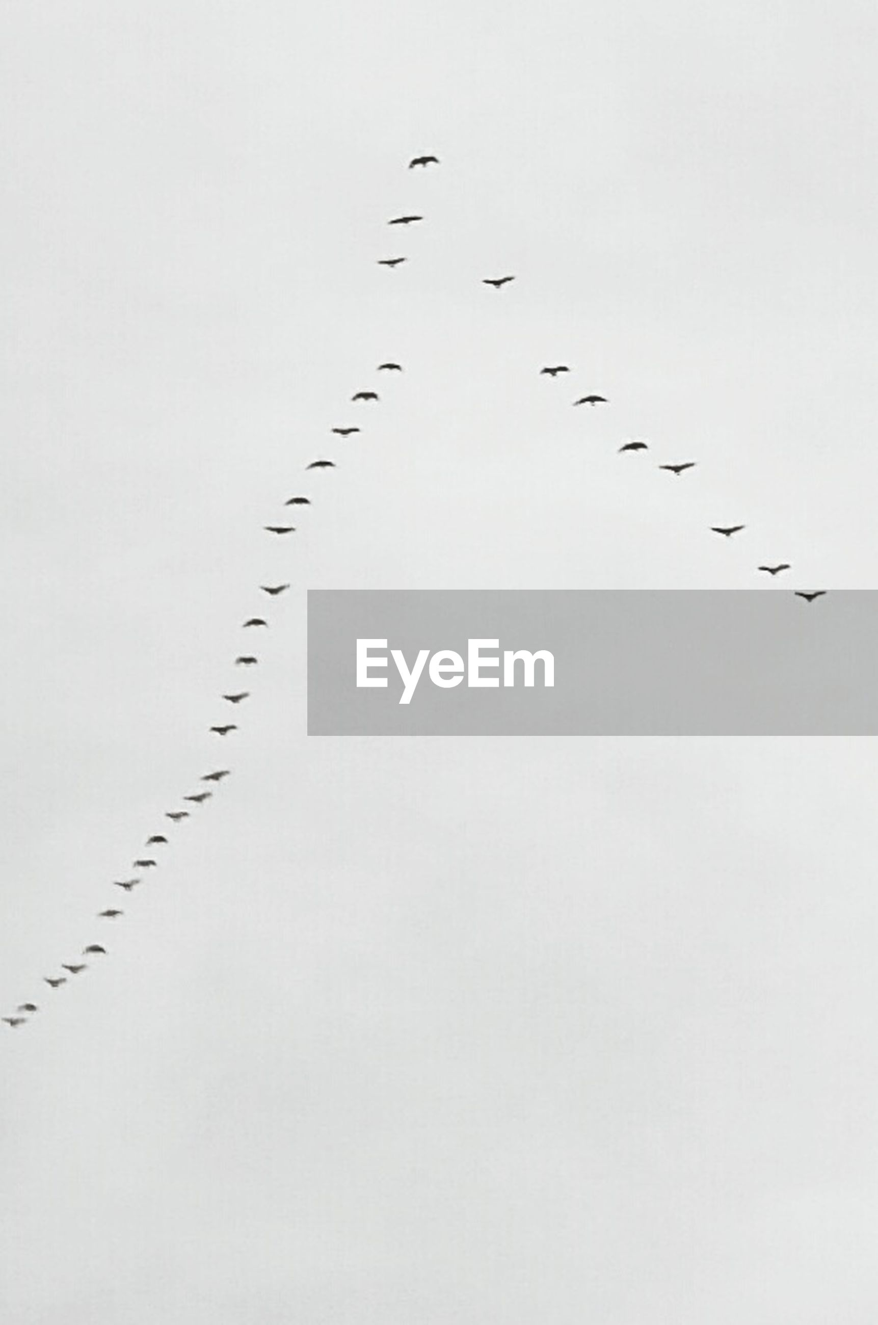 LOW ANGLE VIEW OF BIRDS FLYING OVER WHITE BACKGROUND
