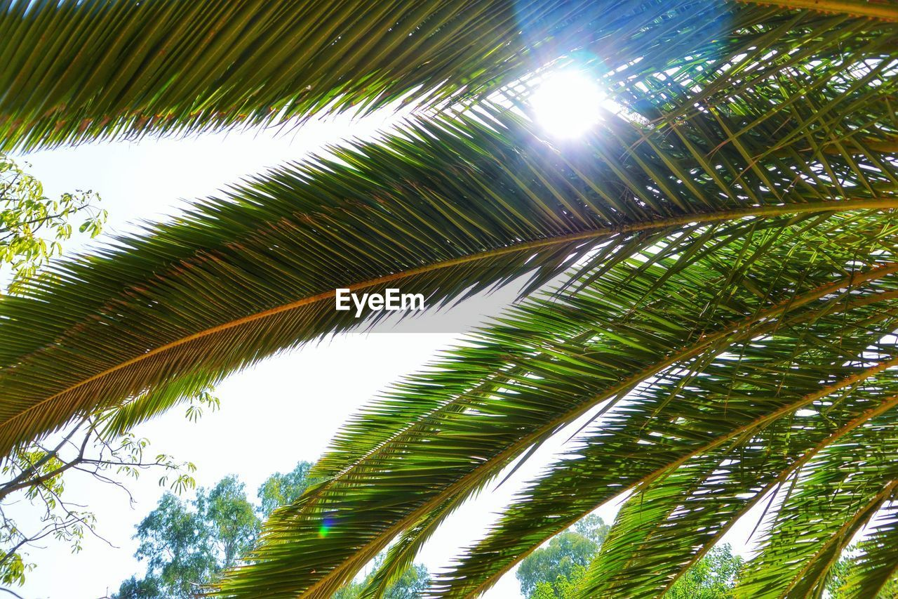 nature, growth, tree, palm tree, leaf, green, low angle view, beauty in nature, no people, day, outdoors, sky, freshness