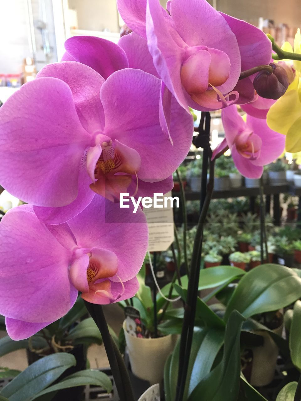 flower, petal, growth, nature, plant, fragility, pink color, beauty in nature, flower head, blooming, outdoors, day, freshness, no people, close-up, orchid