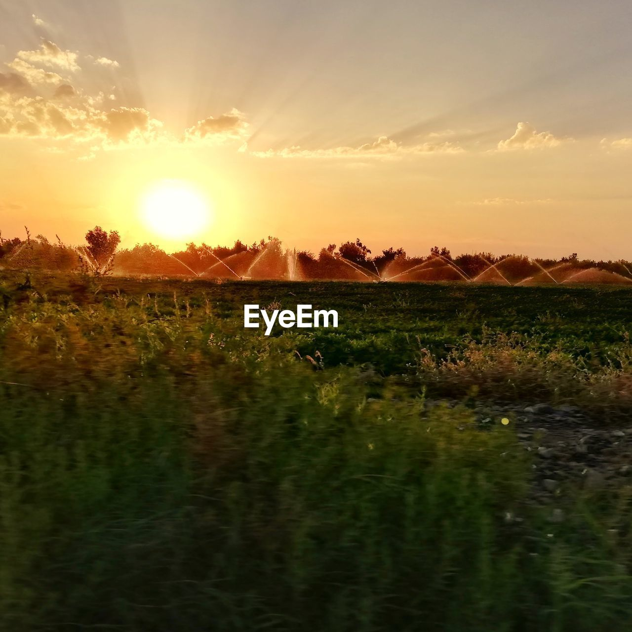sky, sunset, scenics - nature, tranquil scene, beauty in nature, tranquility, plant, landscape, sun, field, environment, land, sunlight, nature, growth, cloud - sky, grass, no people, orange color, idyllic, lens flare, outdoors, bright