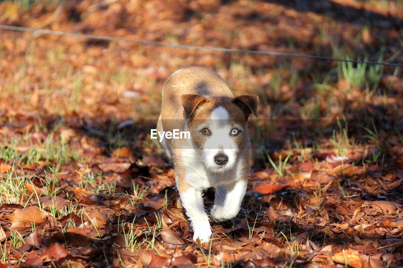 PORTRAIT OF DOG LYING ON GROUND