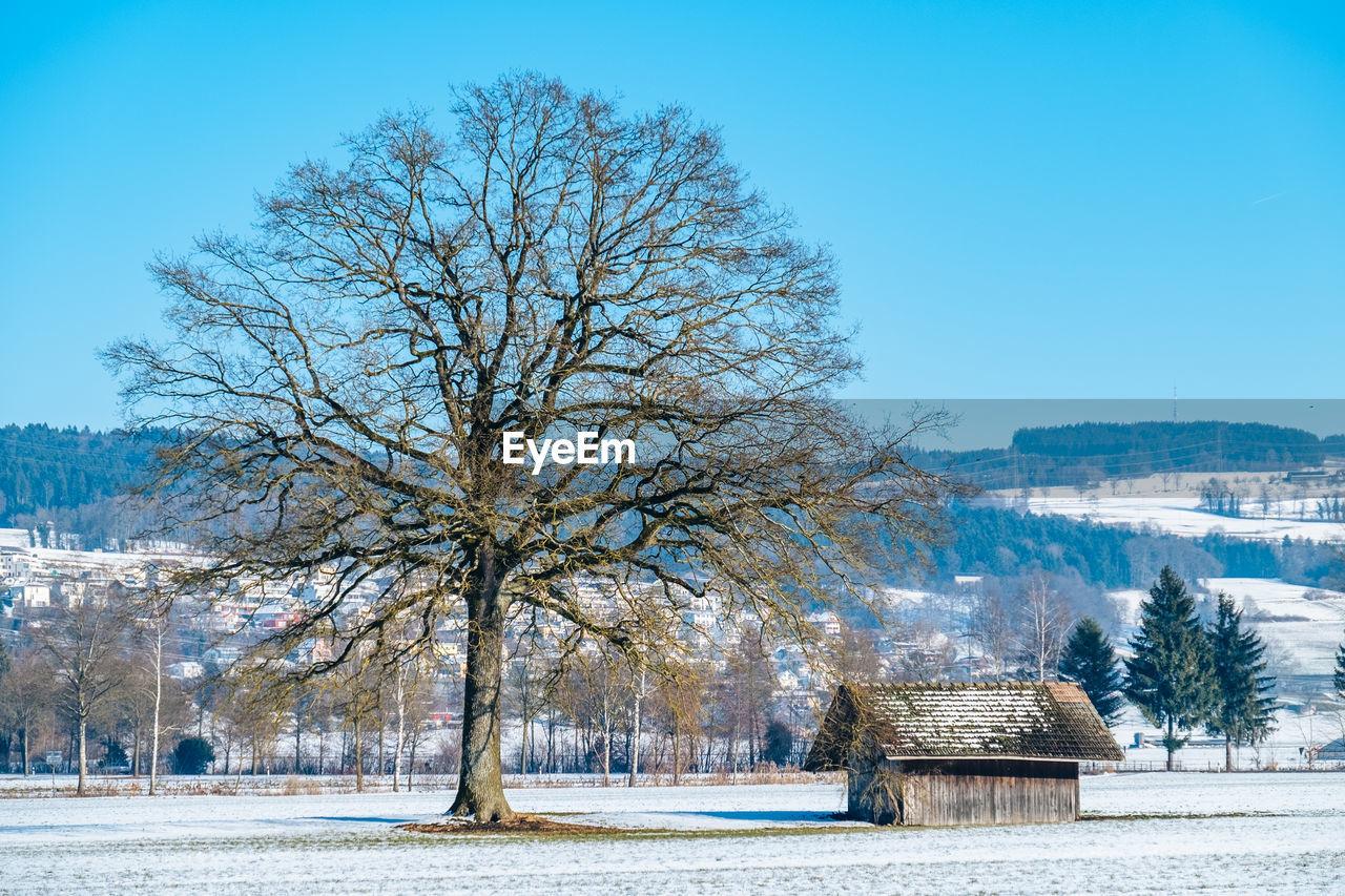 Bare Tree On Field In Winter