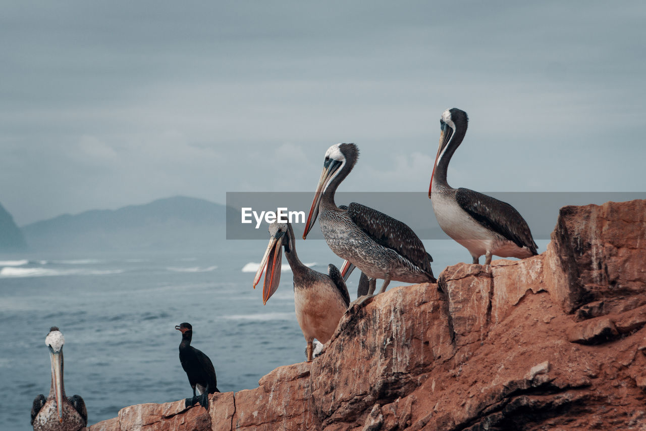 bird, animals in the wild, vertebrate, animal wildlife, group of animals, animal themes, animal, water, nature, sky, sea, day, cloud - sky, beauty in nature, perching, rock - object, rock, no people, solid, outdoors, seagull