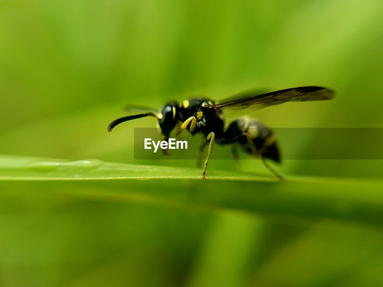 green color, insect, animals in the wild, animal themes, nature, no people, selective focus, close-up, leaf, one animal, plant, day, outdoors, growth, freshness