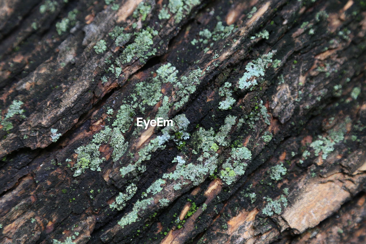 full frame, tree, plant, tree trunk, backgrounds, close-up, textured, trunk, moss, no people, wood - material, rough, extreme close-up, nature, lichen, selective focus, green color, growth, day, focus on foreground, bark, rainforest, textured effect, abstract backgrounds