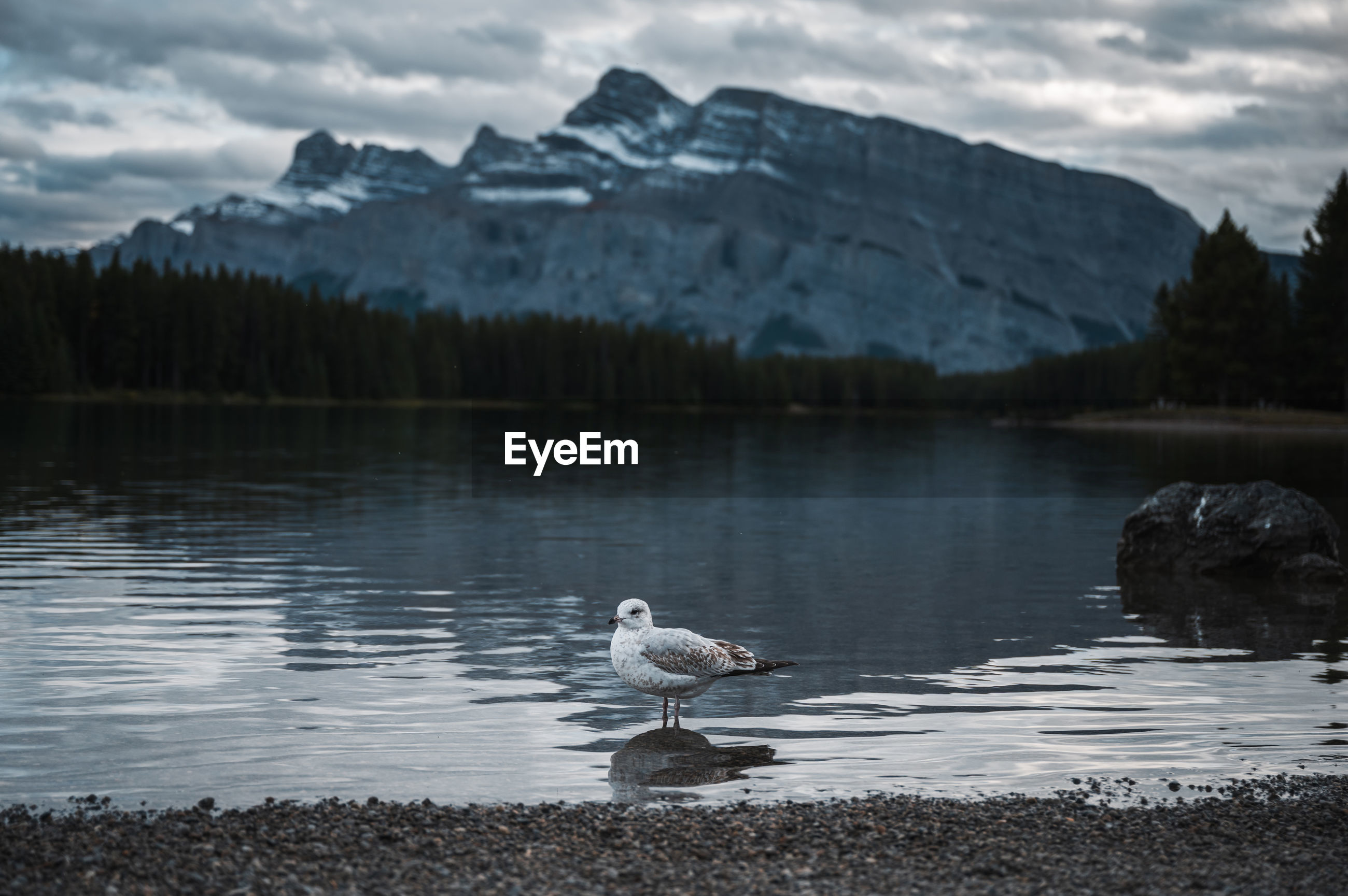 VIEW OF BIRDS ON LAKE AGAINST MOUNTAINS