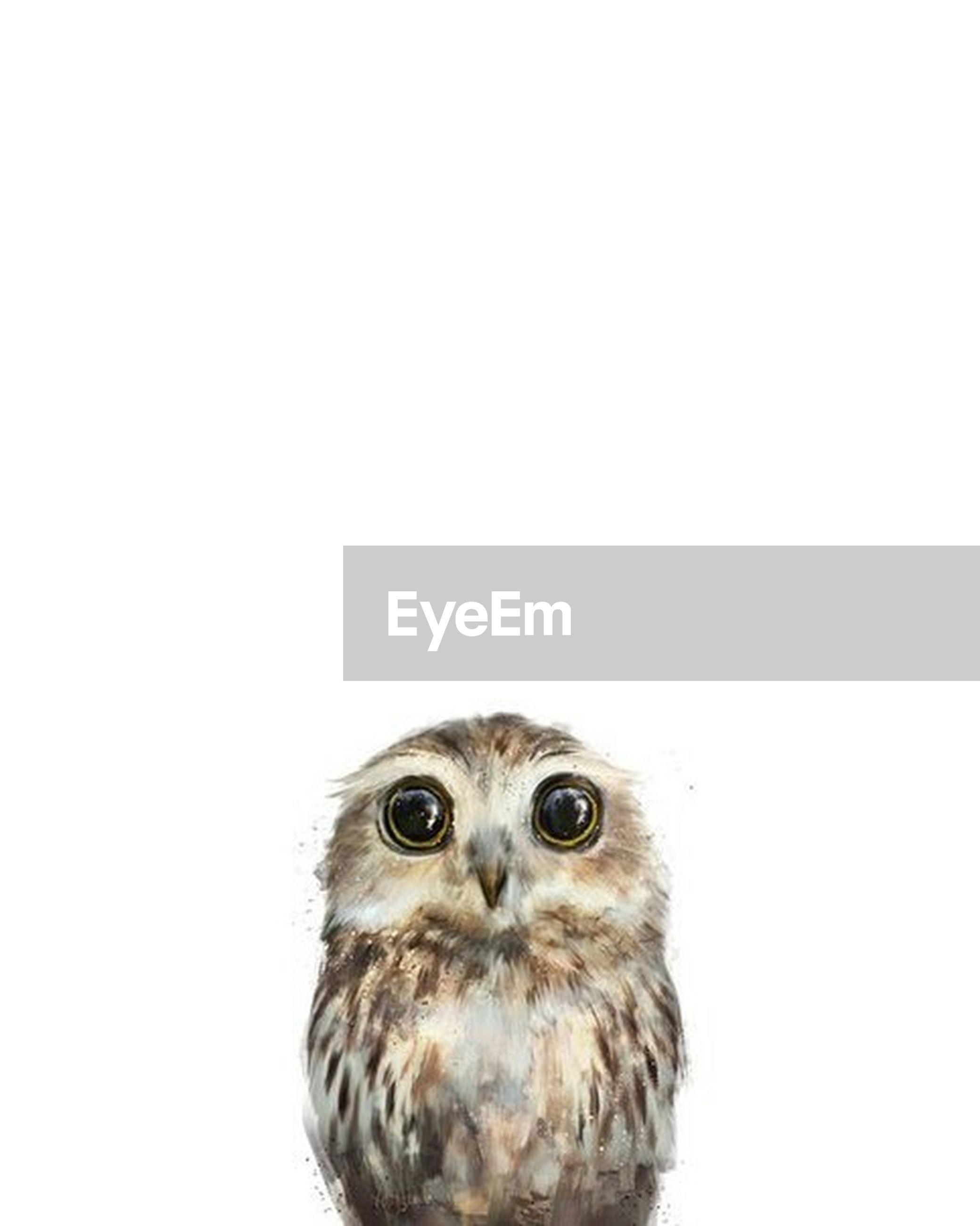 animal themes, one animal, studio shot, white background, copy space, wildlife, animals in the wild, portrait, looking at camera, bird, clear sky, close-up, cut out, animal head, front view, no people, animal eye, bird of prey, animal body part