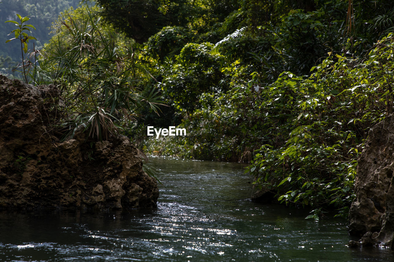 plant, tree, water, nature, forest, no people, scenics - nature, foliage, lush foliage, beauty in nature, river, growth, land, environment, outdoors, day, tranquility, motion, rock, rainforest, flowing water