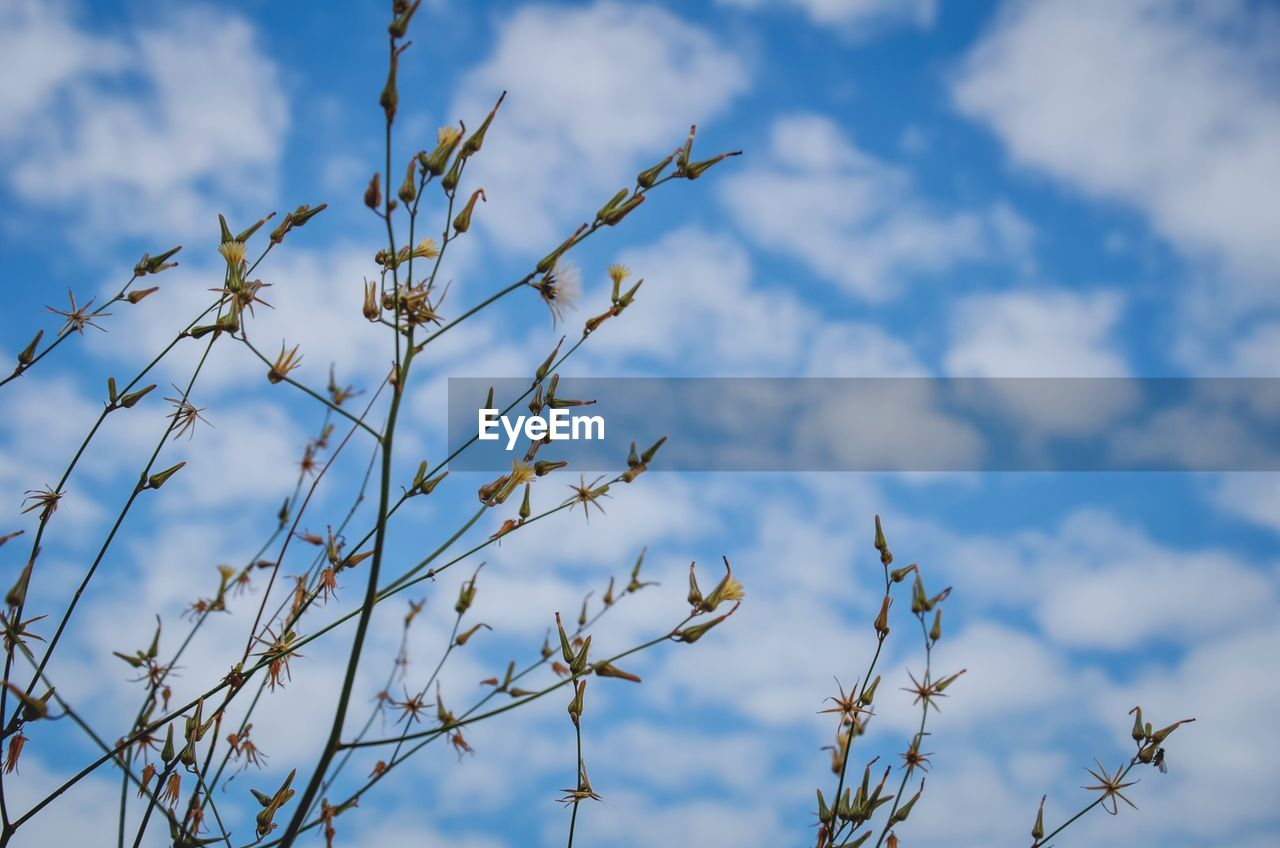sky, plant, cloud - sky, low angle view, beauty in nature, growth, no people, day, nature, tranquility, outdoors, blue, close-up, focus on foreground, tree, plant stem, twig, flower, selective focus, scenics - nature