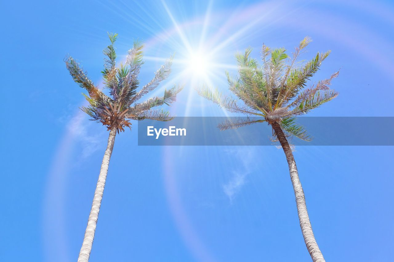 sky, low angle view, sunlight, palm tree, nature, day, growth, tropical climate, plant, tree, lens flare, sunny, blue, sunbeam, no people, sun, beauty in nature, outdoors, tall - high, tree trunk, bright, coconut palm tree, solar flare, brightly lit