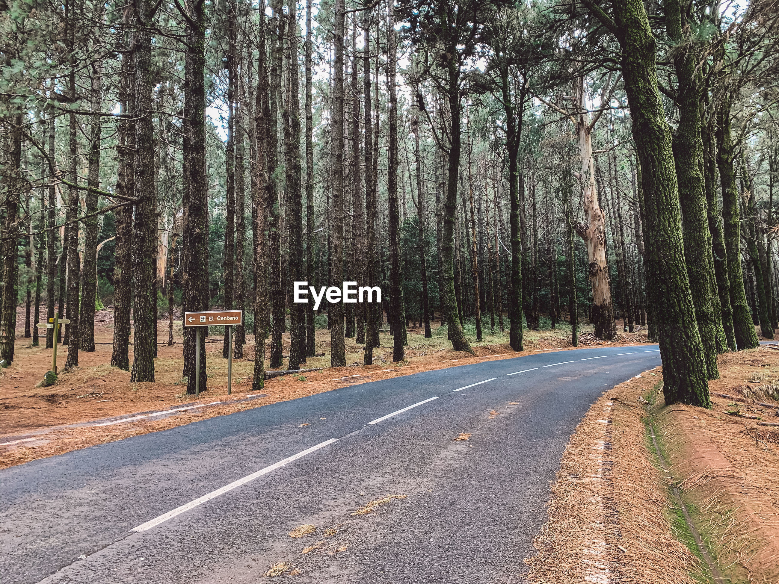 VIEW OF EMPTY ROAD ALONG TREES
