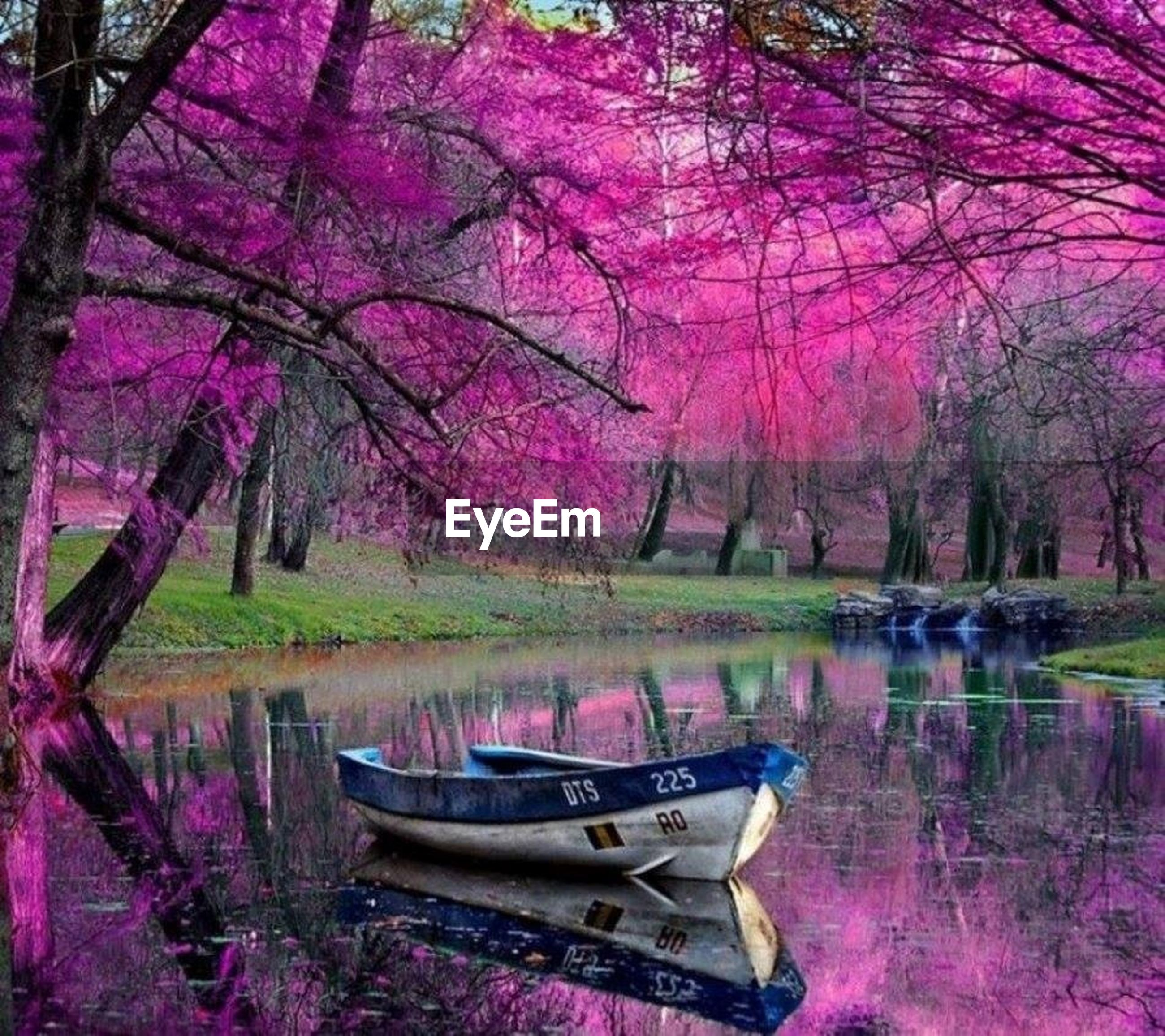 tree, water, lake, tranquil scene, tranquility, beauty in nature, reflection, nature, nautical vessel, boat, branch, growth, scenics, pink color, moored, idyllic, transportation, outdoors, mode of transport, lakeshore