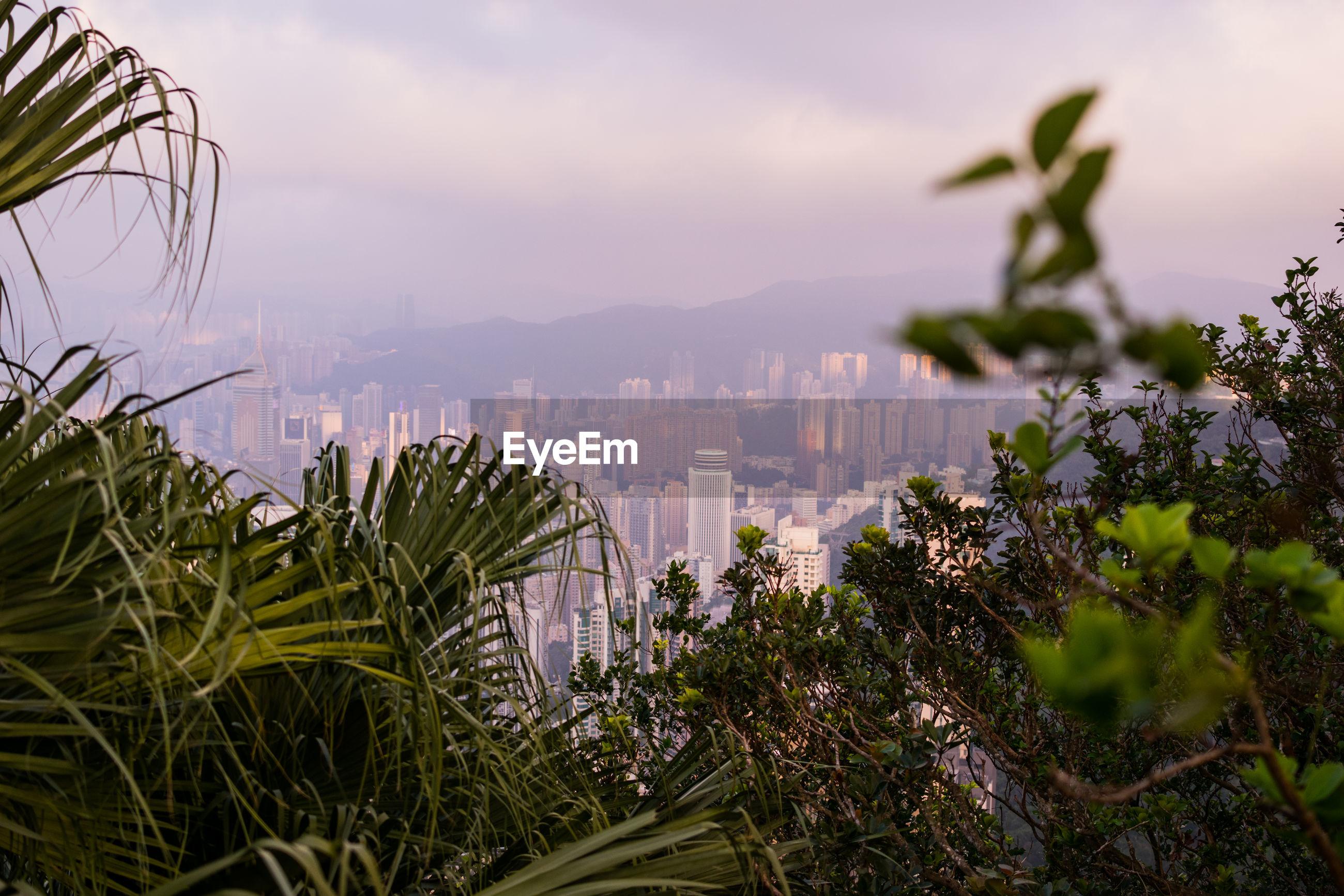 PLANTS GROWING BY BUILDINGS AGAINST SKY