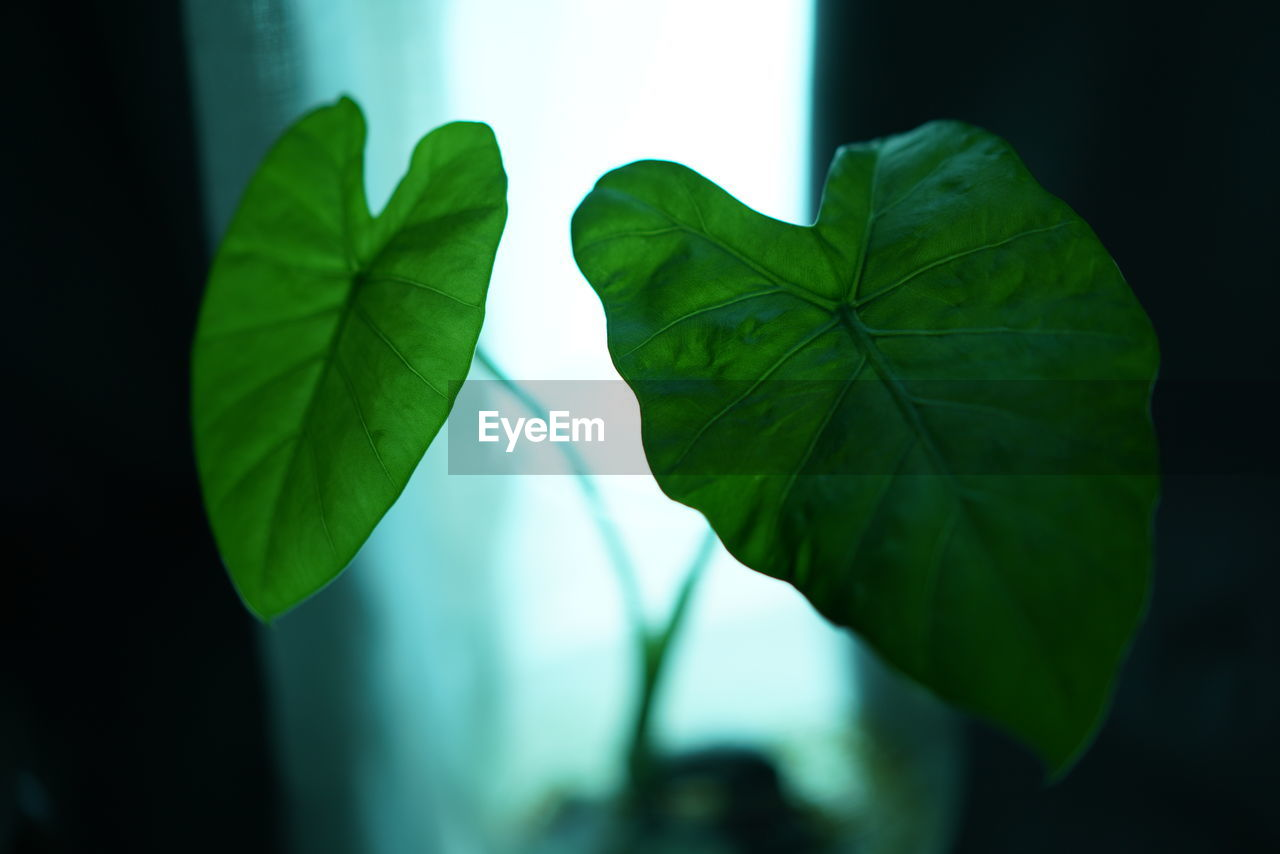leaf, plant part, green color, close-up, plant, growth, nature, focus on foreground, beauty in nature, selective focus, no people, day, freshness, leaf vein, outdoors, vulnerability, fragility, leaves, sunlight