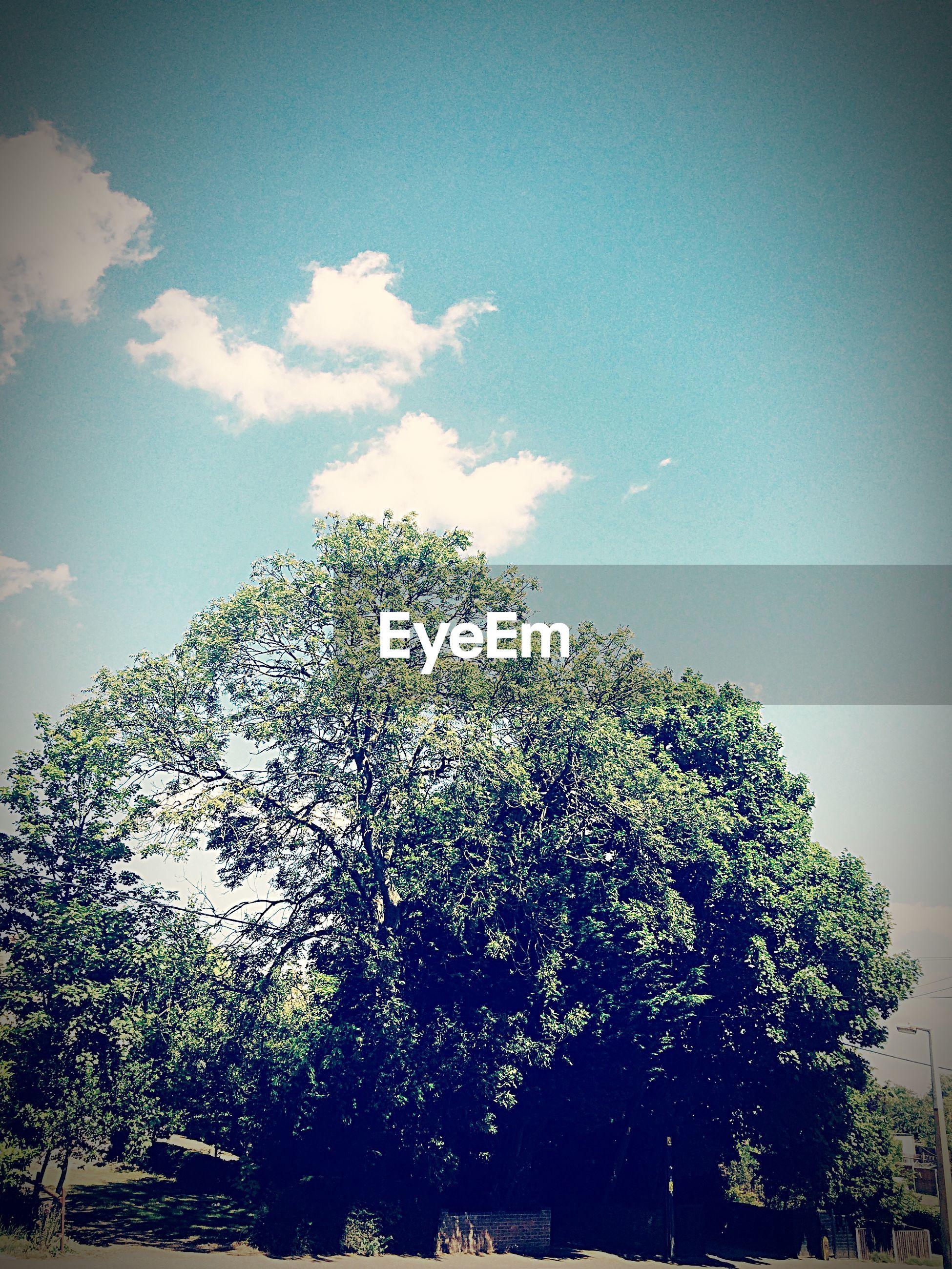 Tree growing against sky